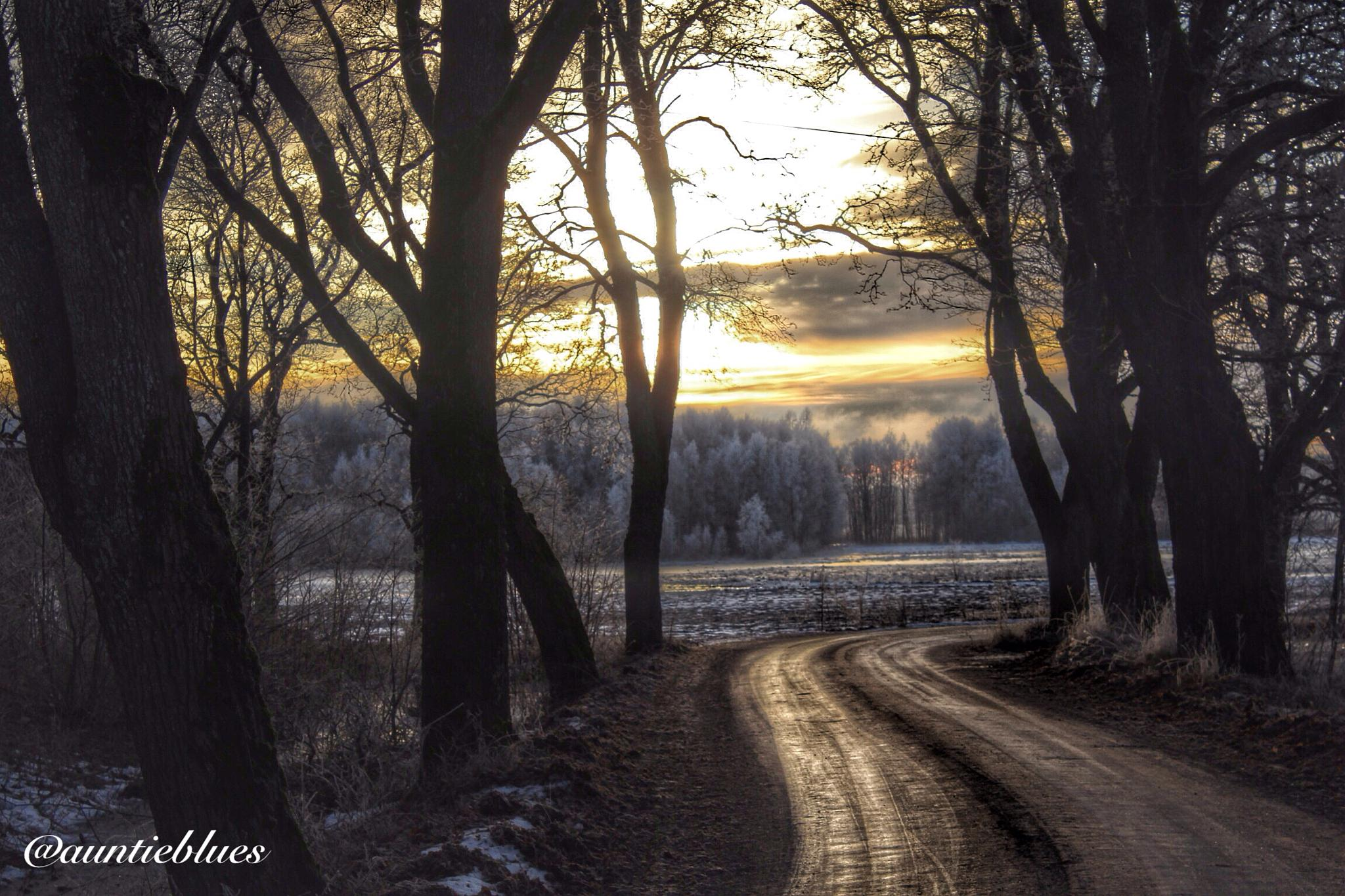 Icy dirt road  by Auntieblues