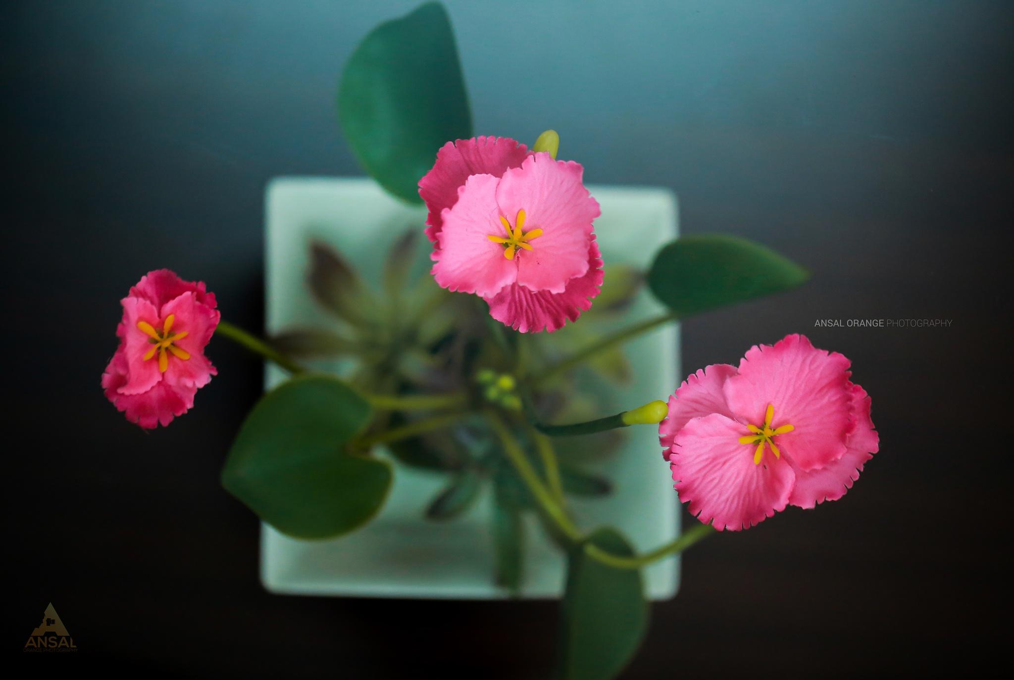 flowers by Ansal Orange