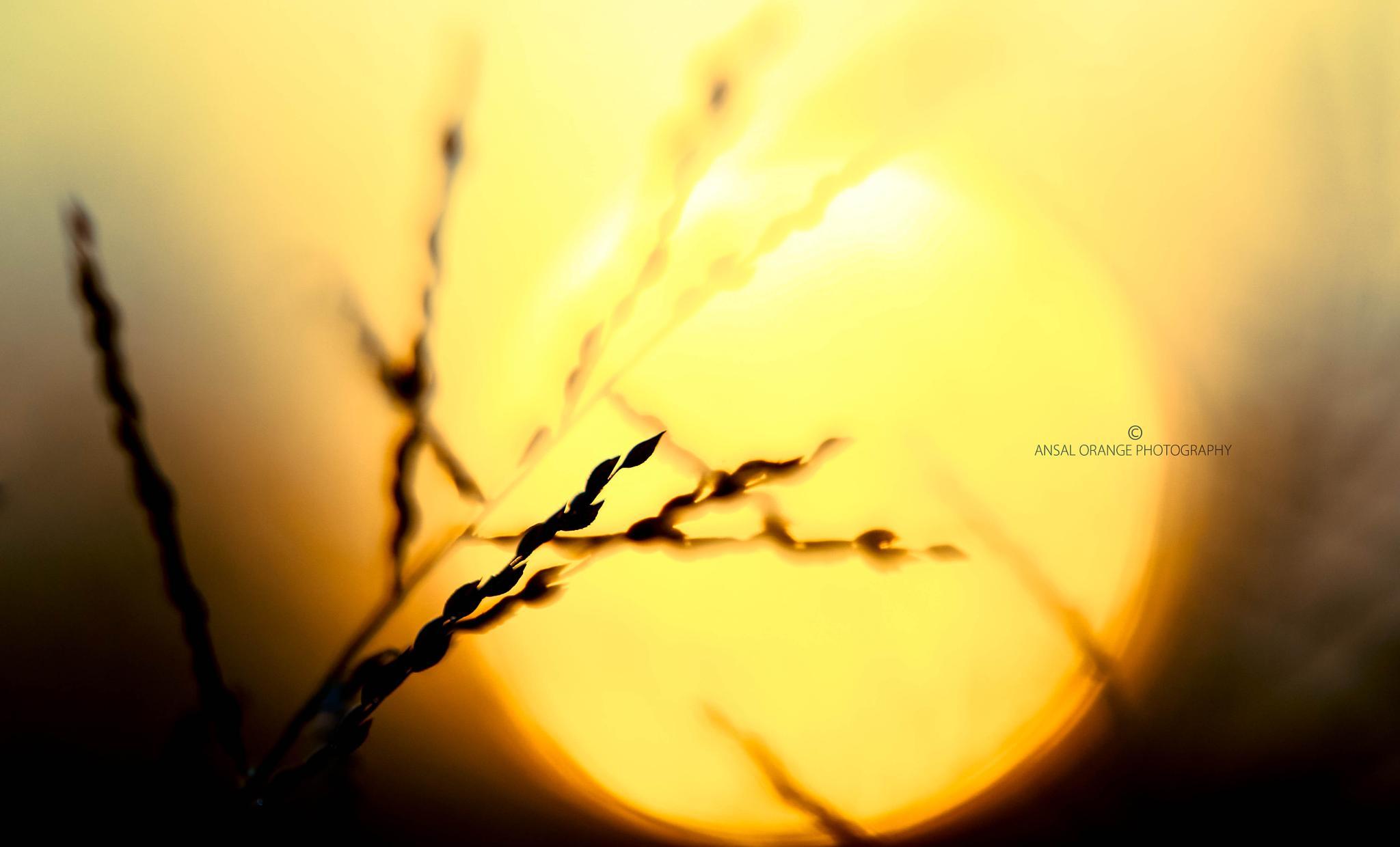 Sun Rise by Ansal Orange