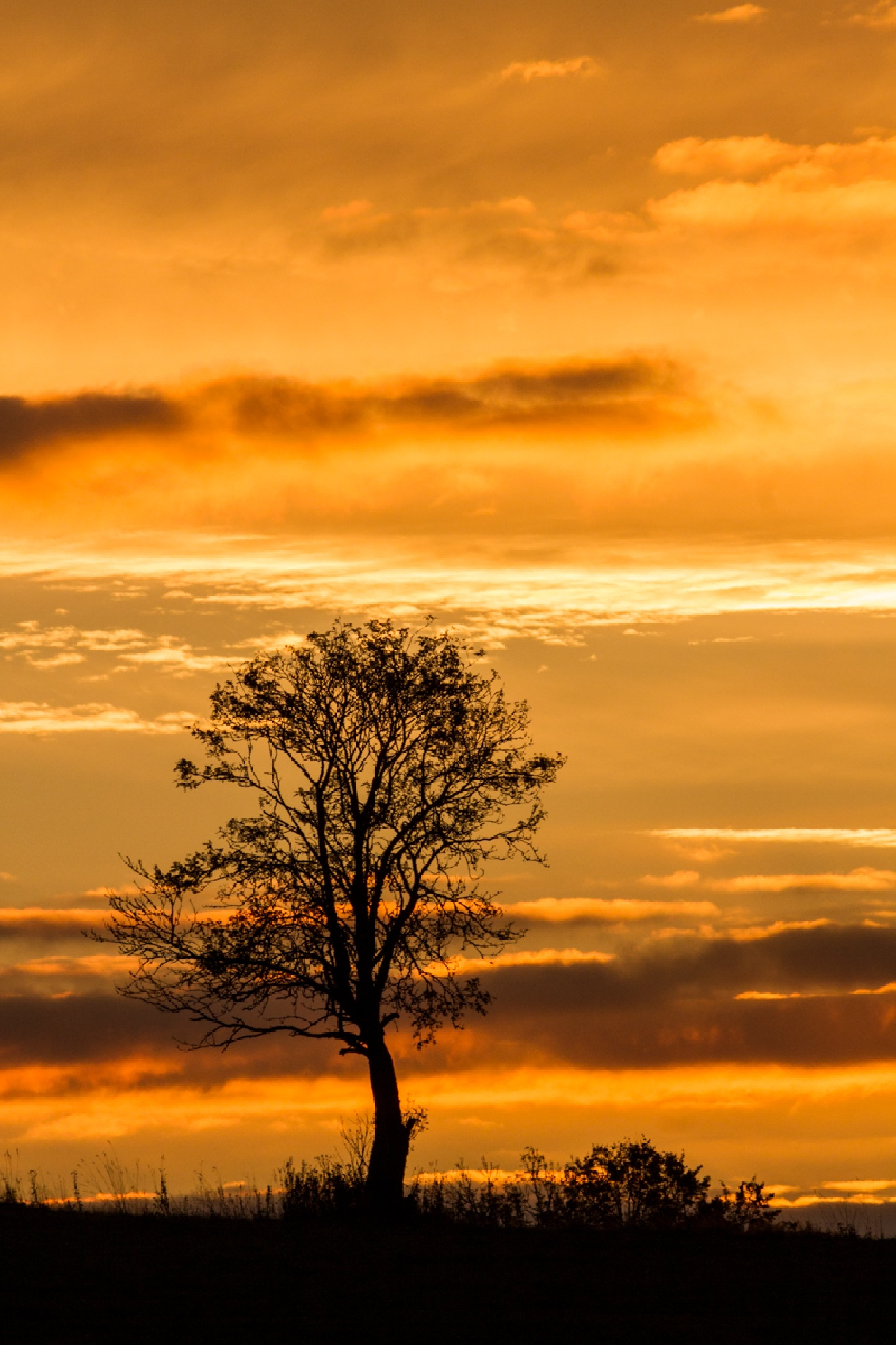 Single tree by mikael.breding