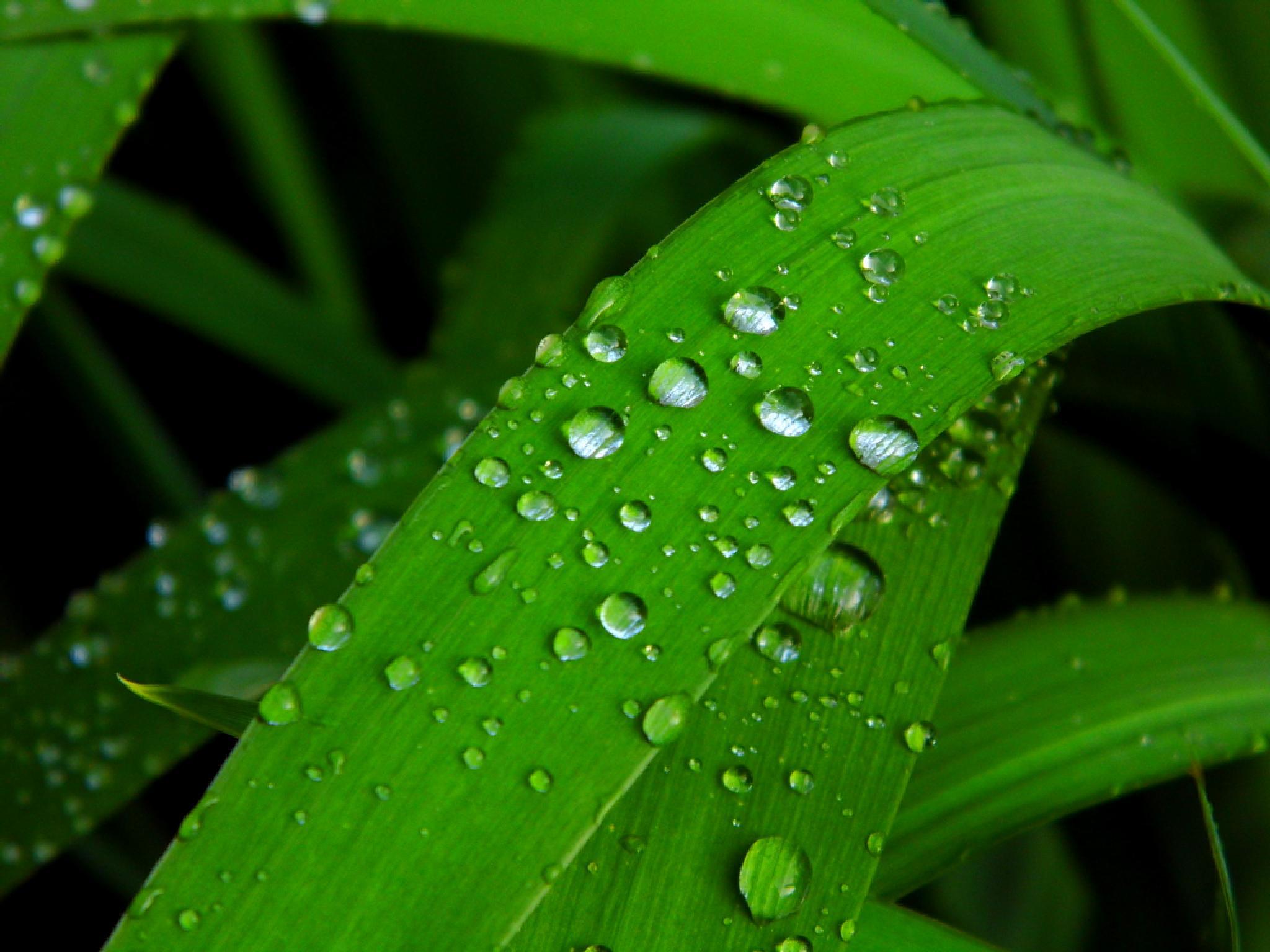 Rain drops by Ann