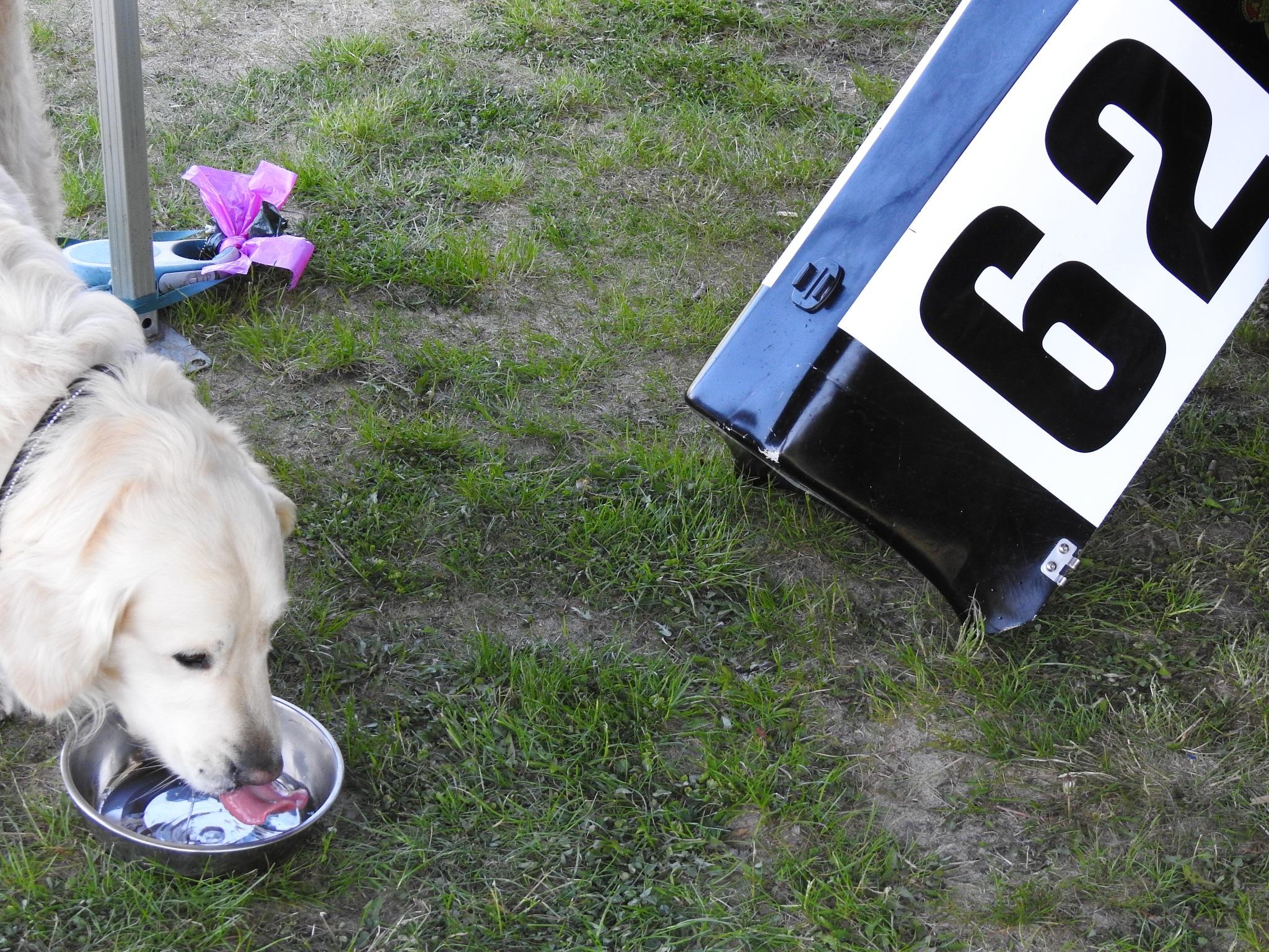 Racing dog by tranaker