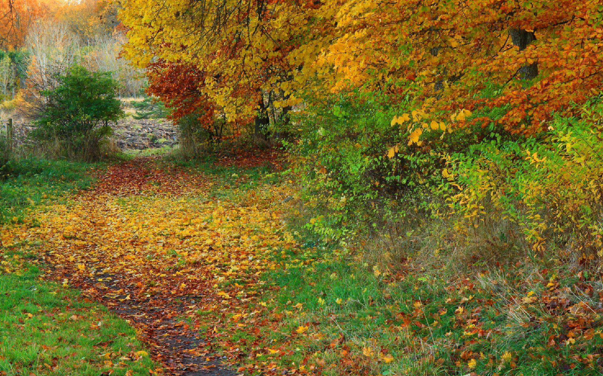 Autumn colors by micke.wallman