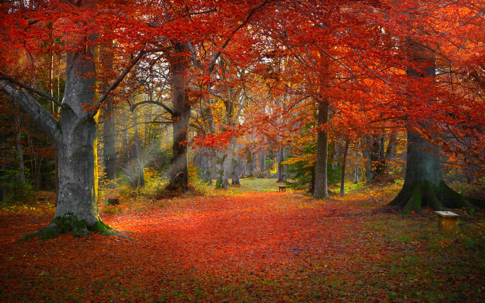 Fall colors in the park. by micke.wallman