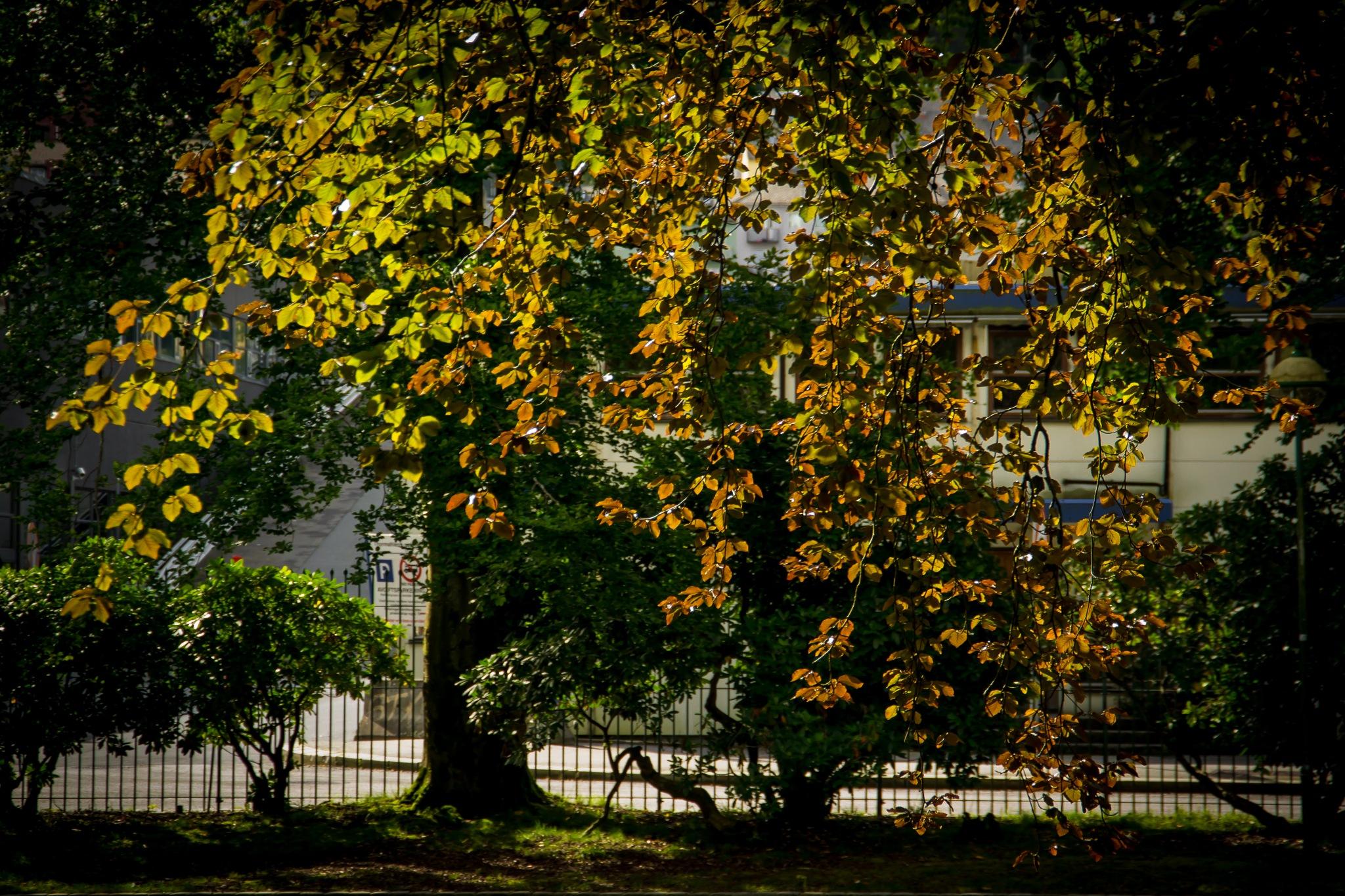 Autumn Arrives by MjollnirMacAlba