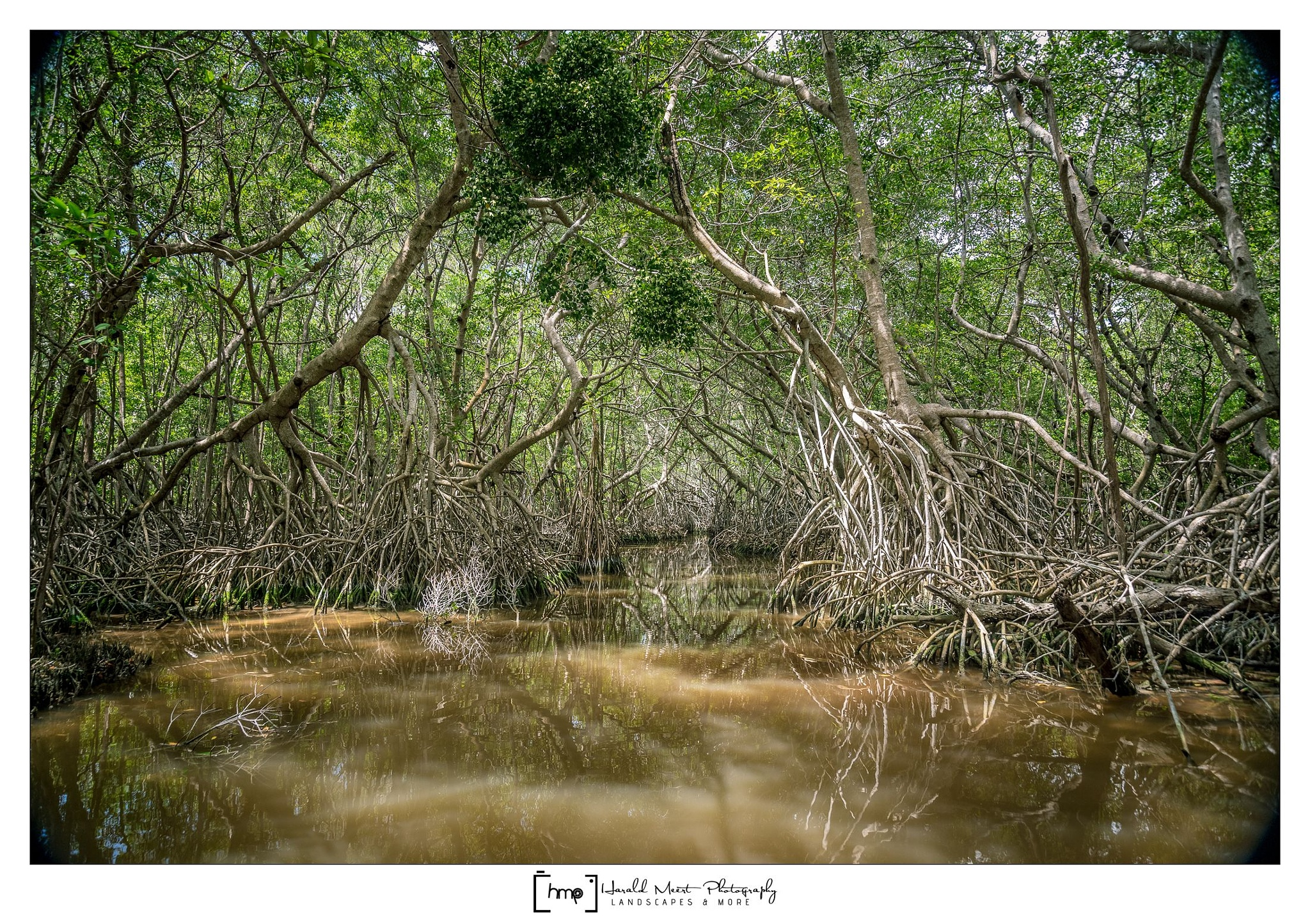 Mangrove (Celestún, Mexico) by HaraldMeert
