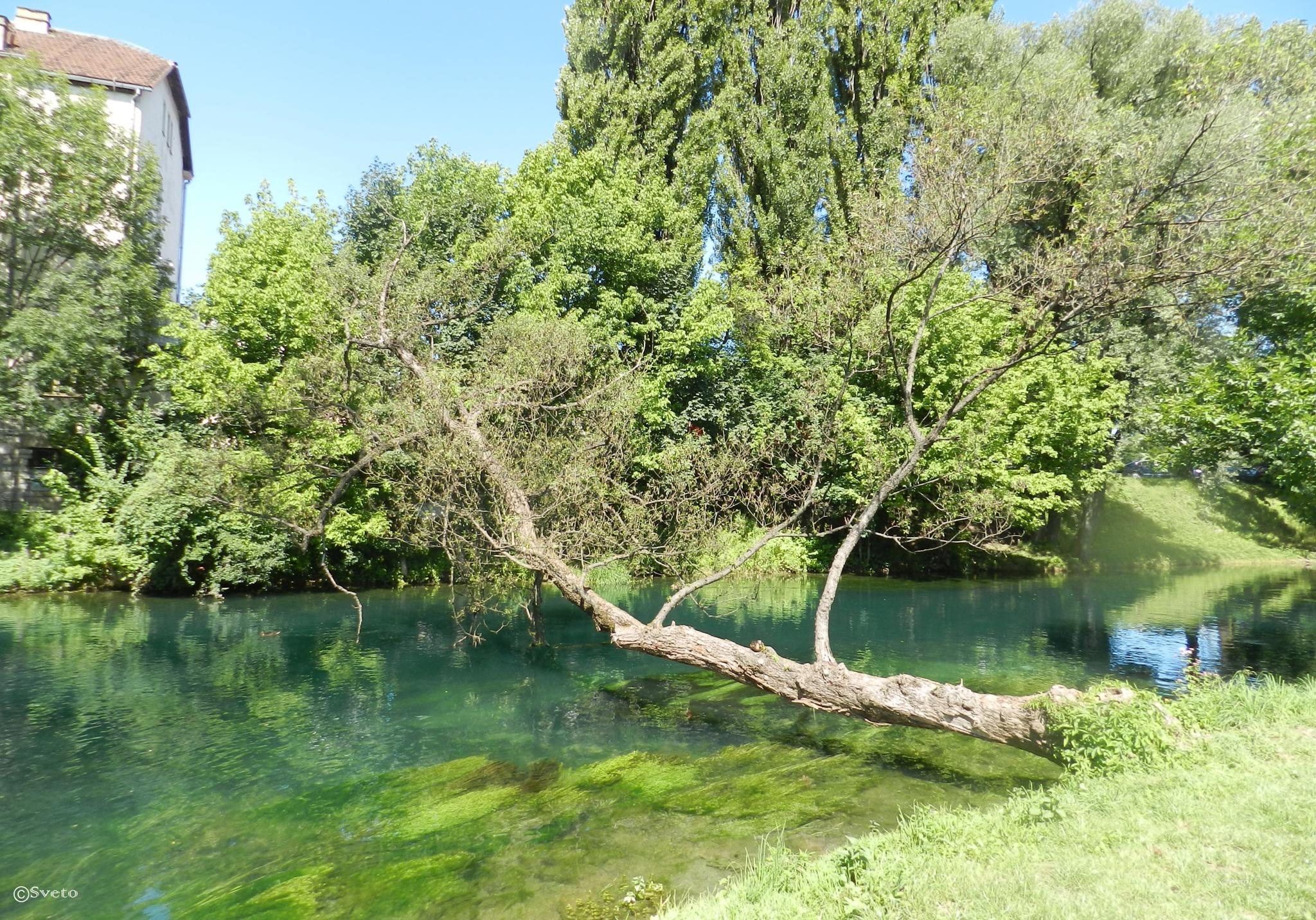 Bihać, Bosna i Hercegovina by stevsveto