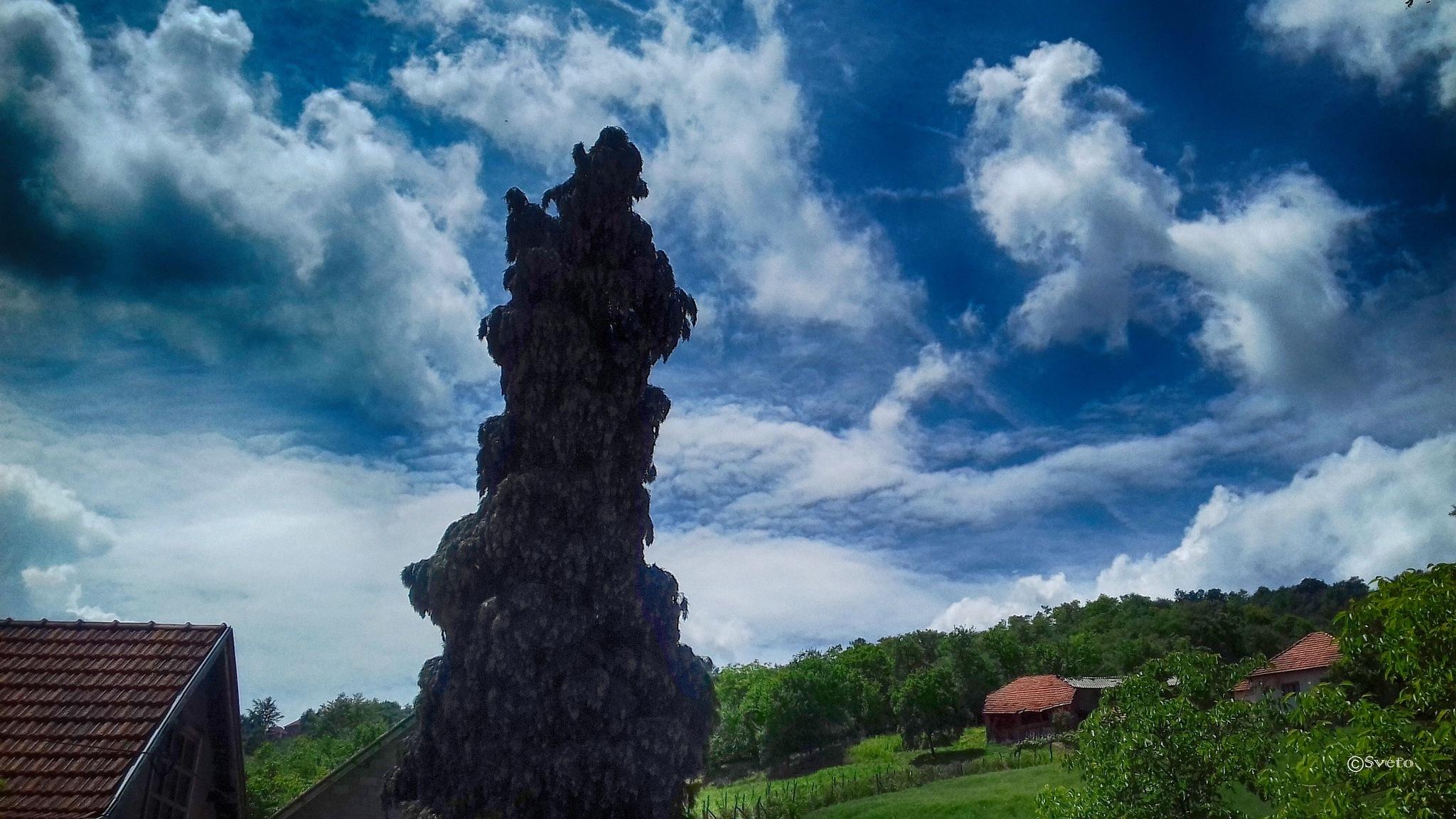 Јелова Гора, Србија  by stevsveto