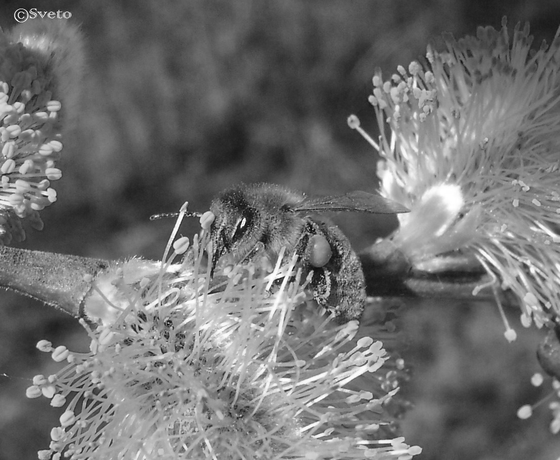 Untitled by stevsveto