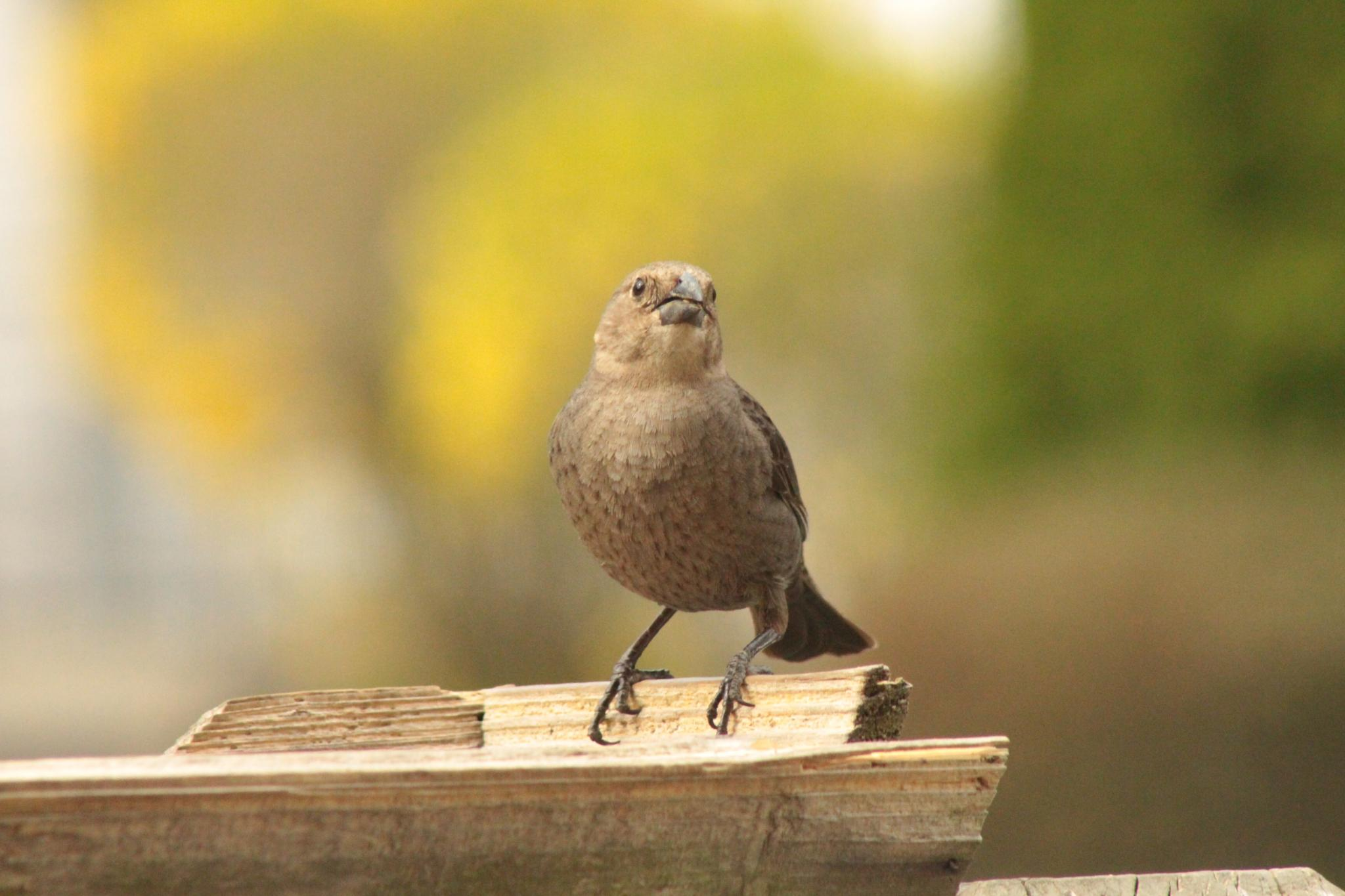 Bird by prterrero92