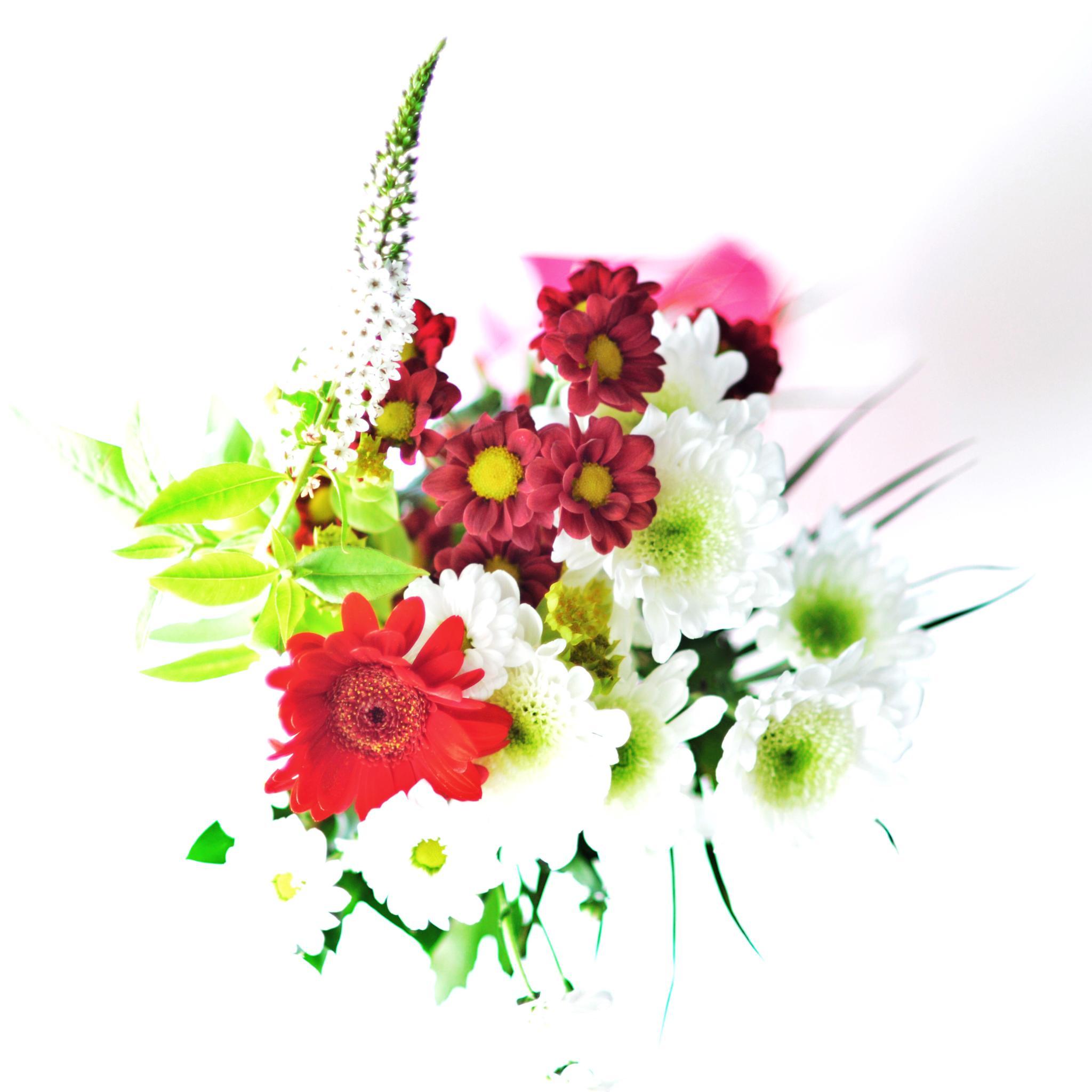 Flowers by Göran Söderlund