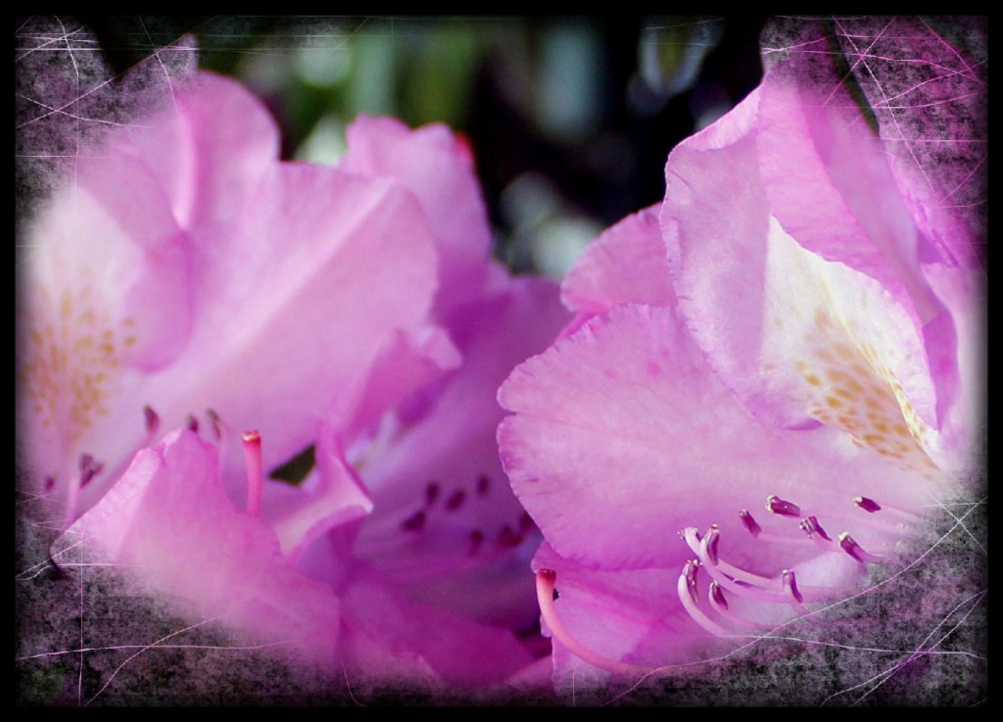 Pink 6 by eclair.martinek