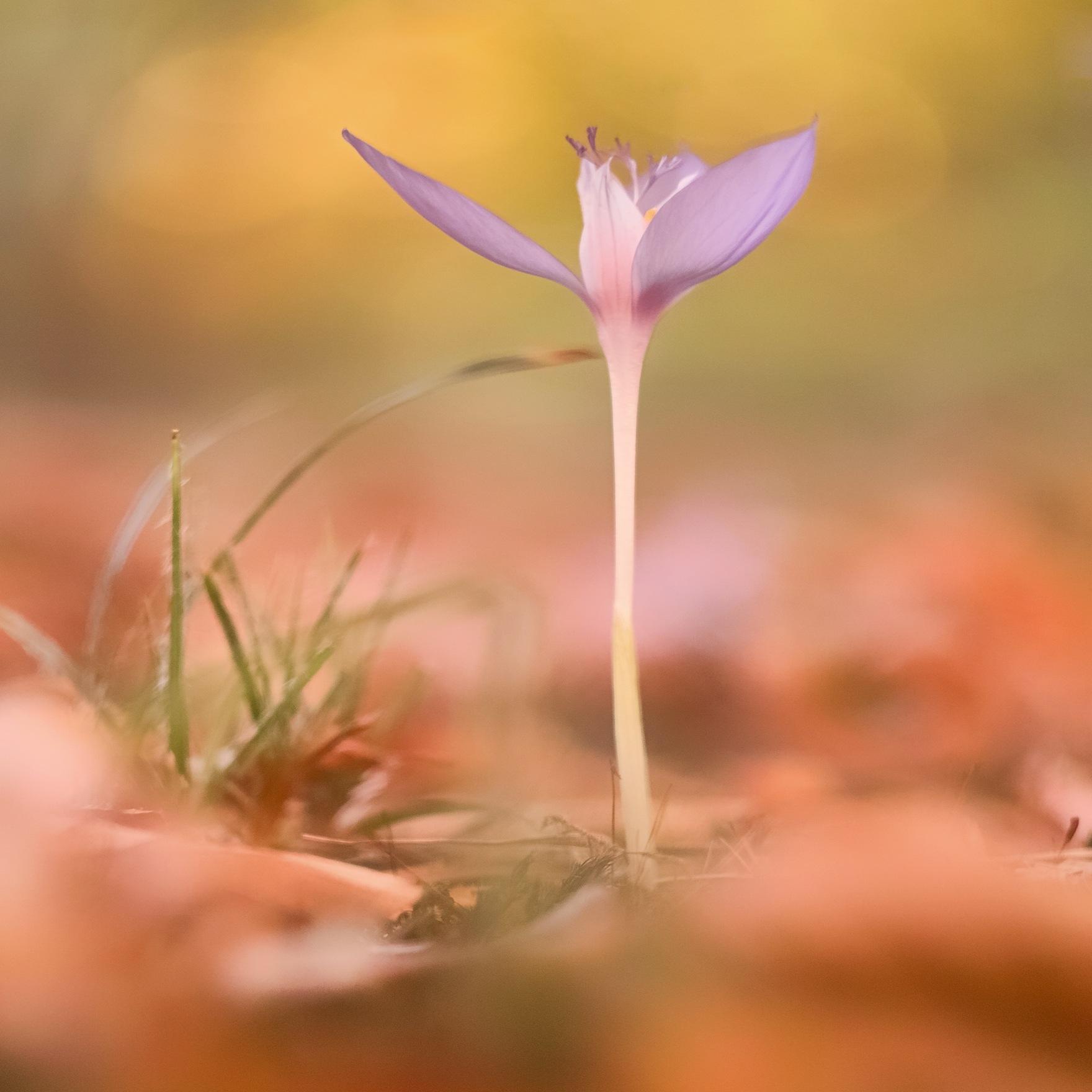 Autumn wild flower 11 by mugurelcm