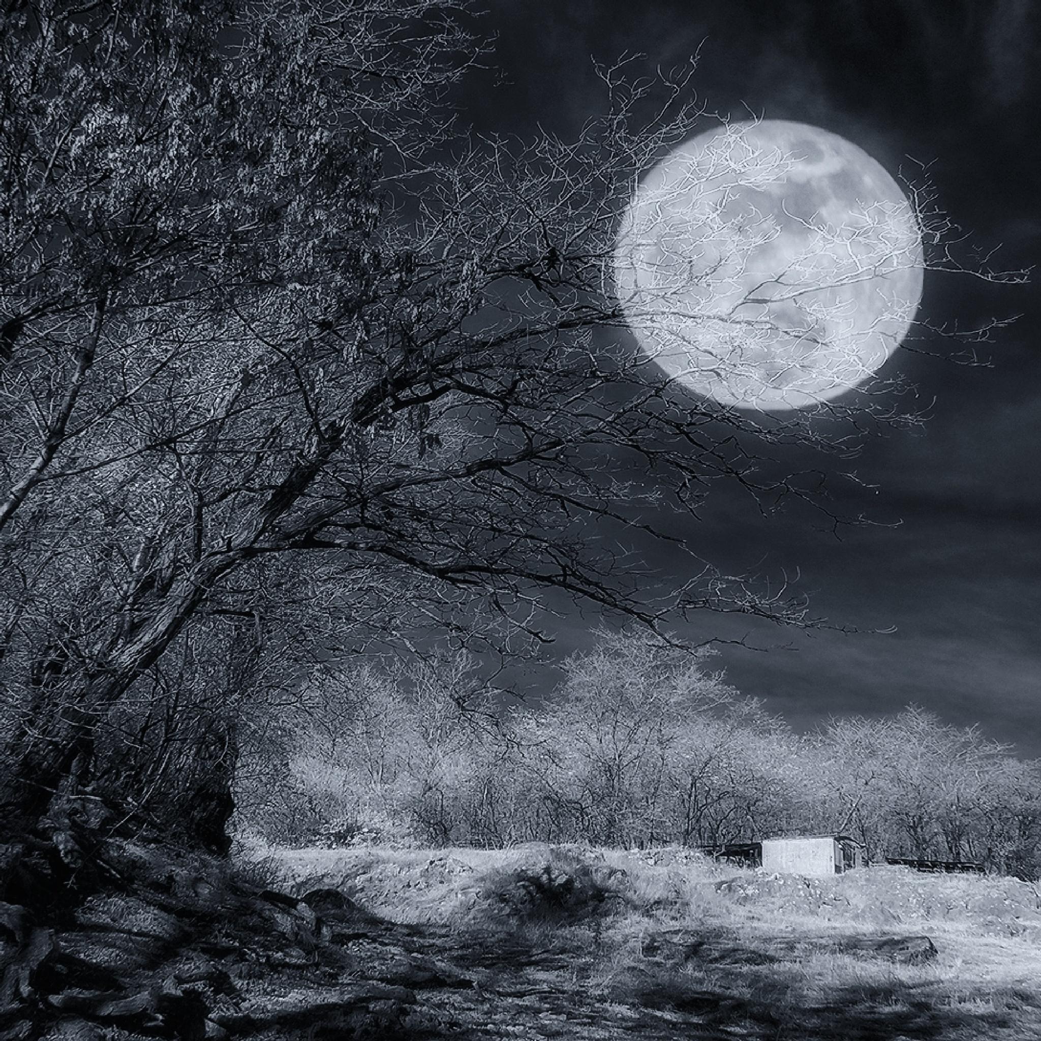 Infrared moon by mugurelcm
