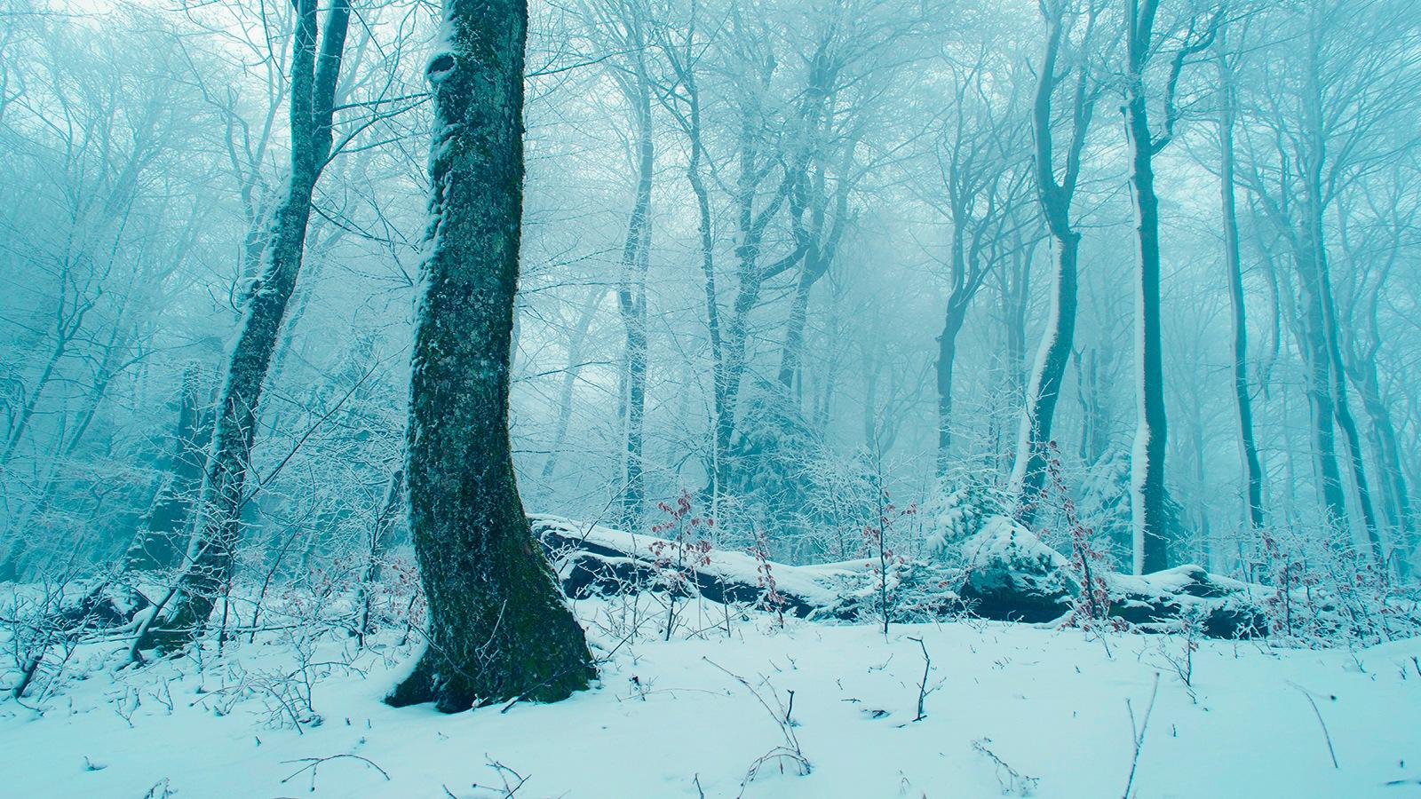 Winter forest by mugurelcm