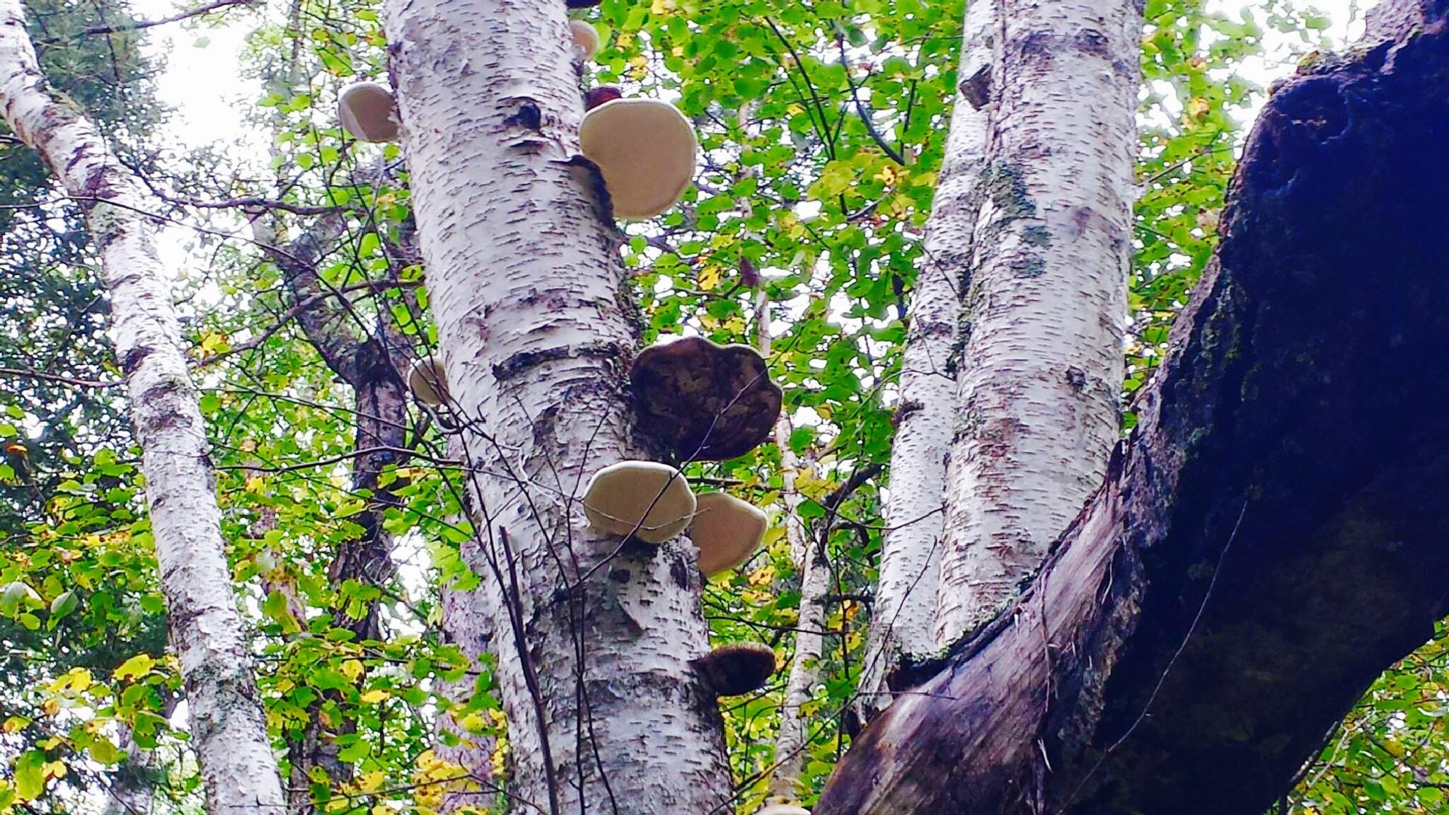 Mushroom steps on tree by ReneeEPlemmons
