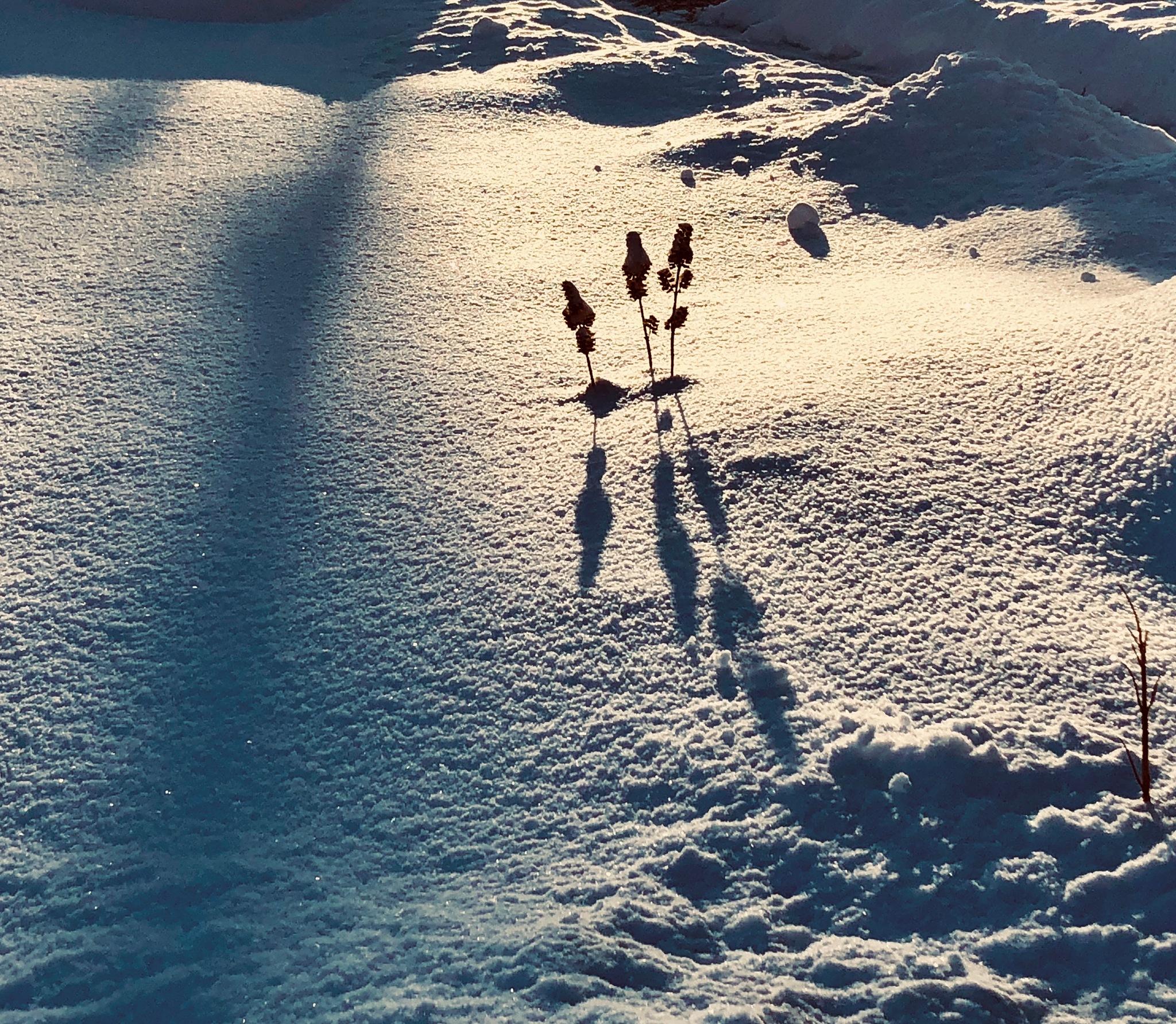 Glistening snow by ReneeEPlemmons