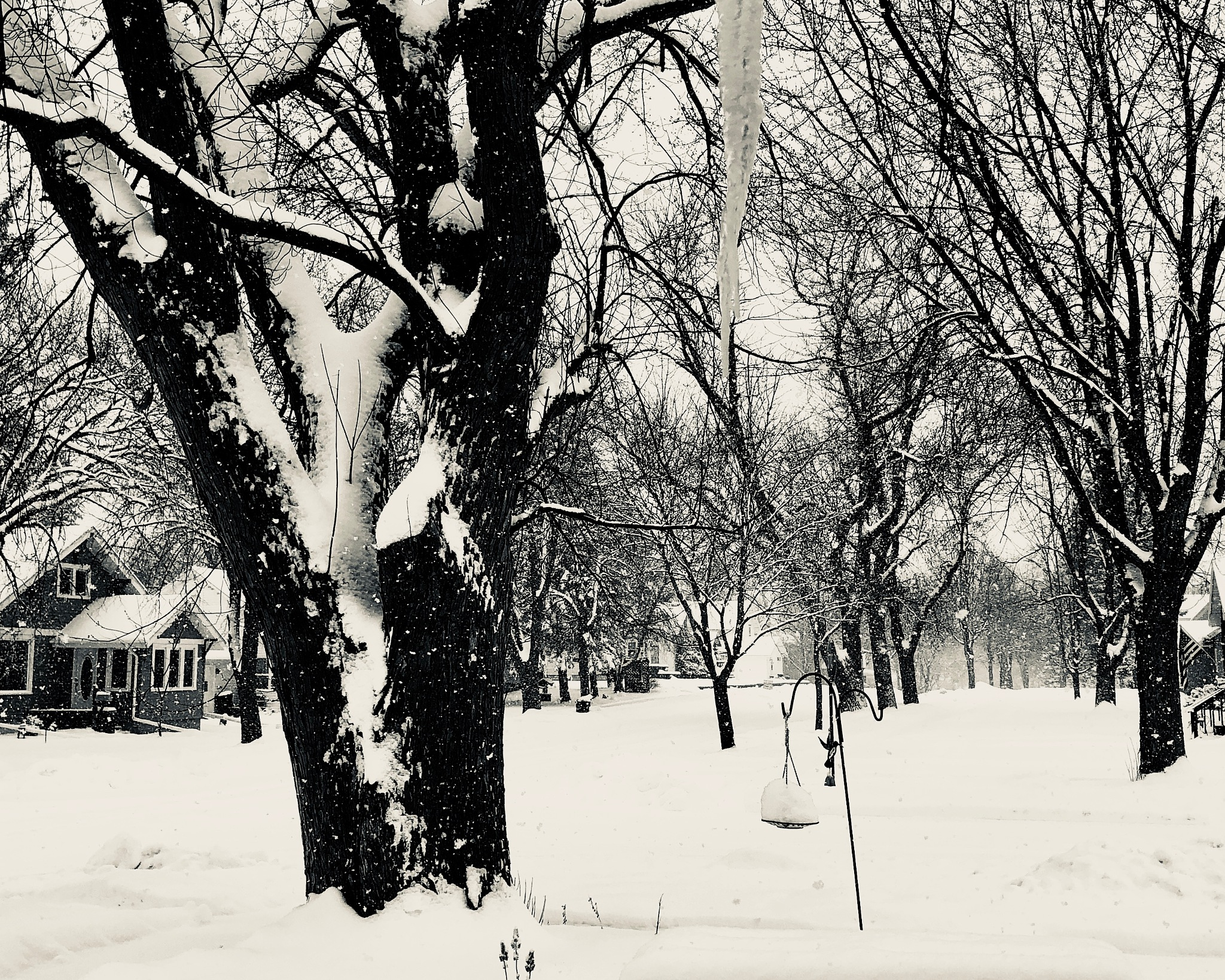Mid afternoon Minnesota snowfall by ReneeEPlemmons
