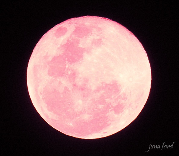 #moon `stephanie antonella´  on june 28, 2018  #photo_by_juna_fard  by juna fard