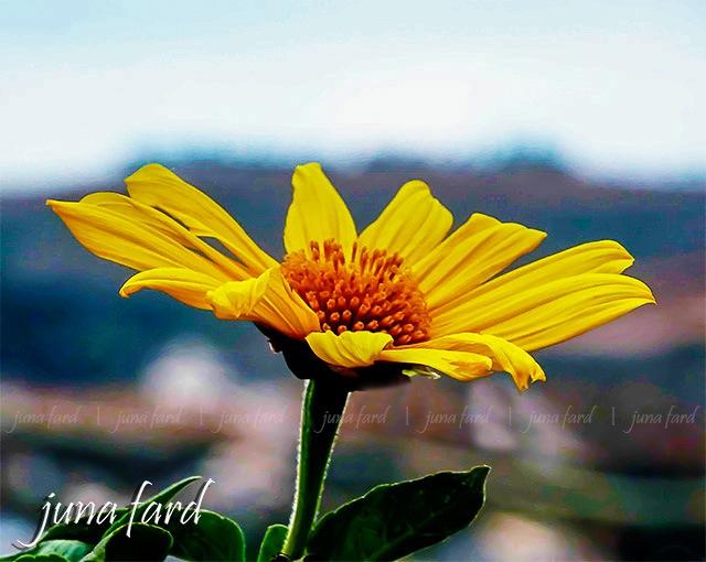   fleur  photo_by_juna_fard    by juna fard