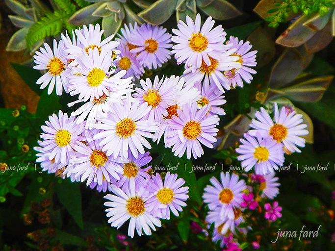 #flowers #photo_by_juna_fard by juna fard