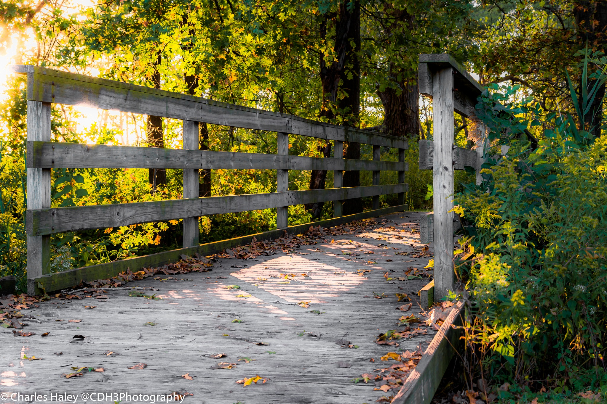 Cross the Bridge to Fall Colors by CDH3Photography