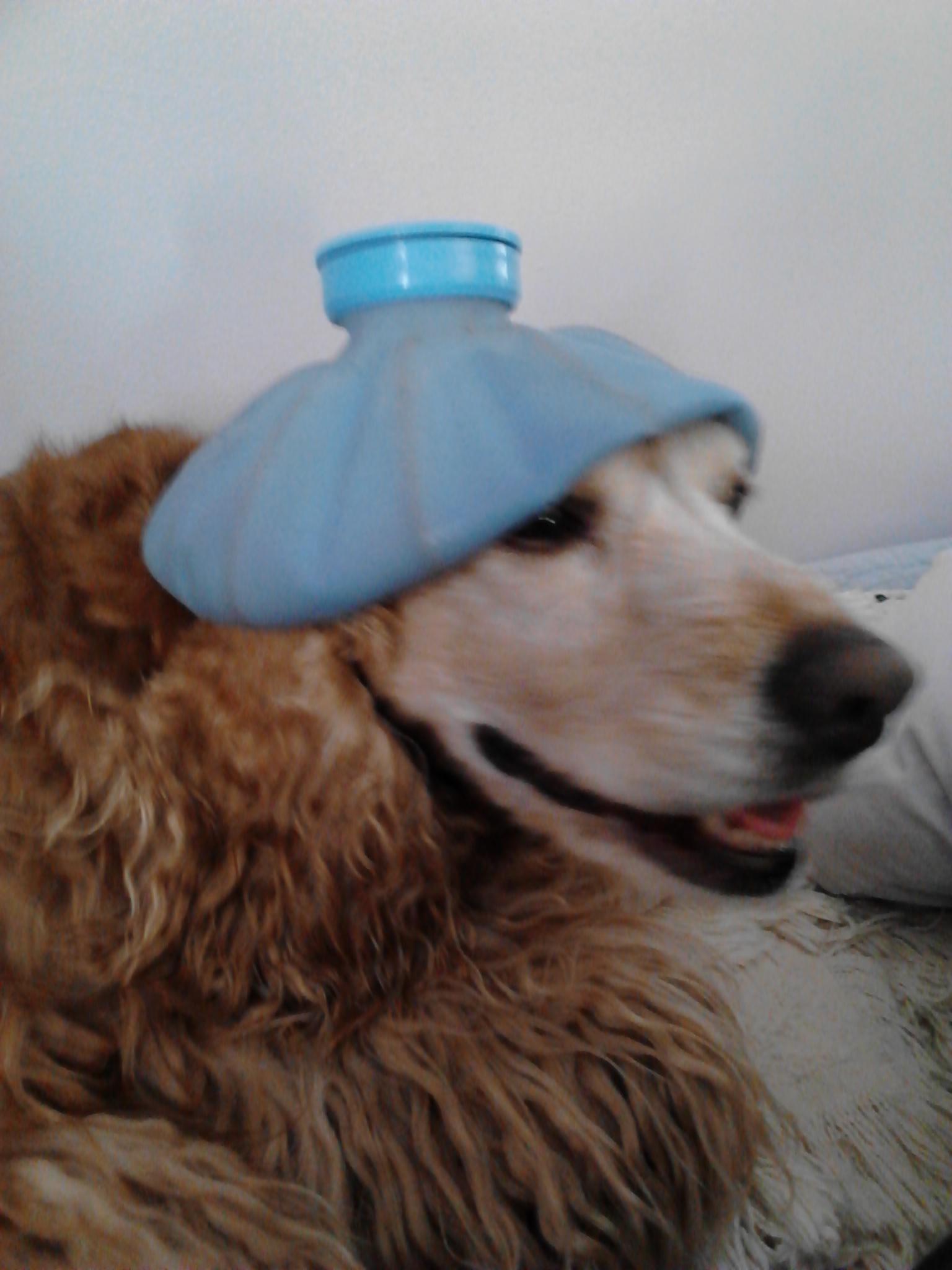 Pup Headache by mary.keenantownsend