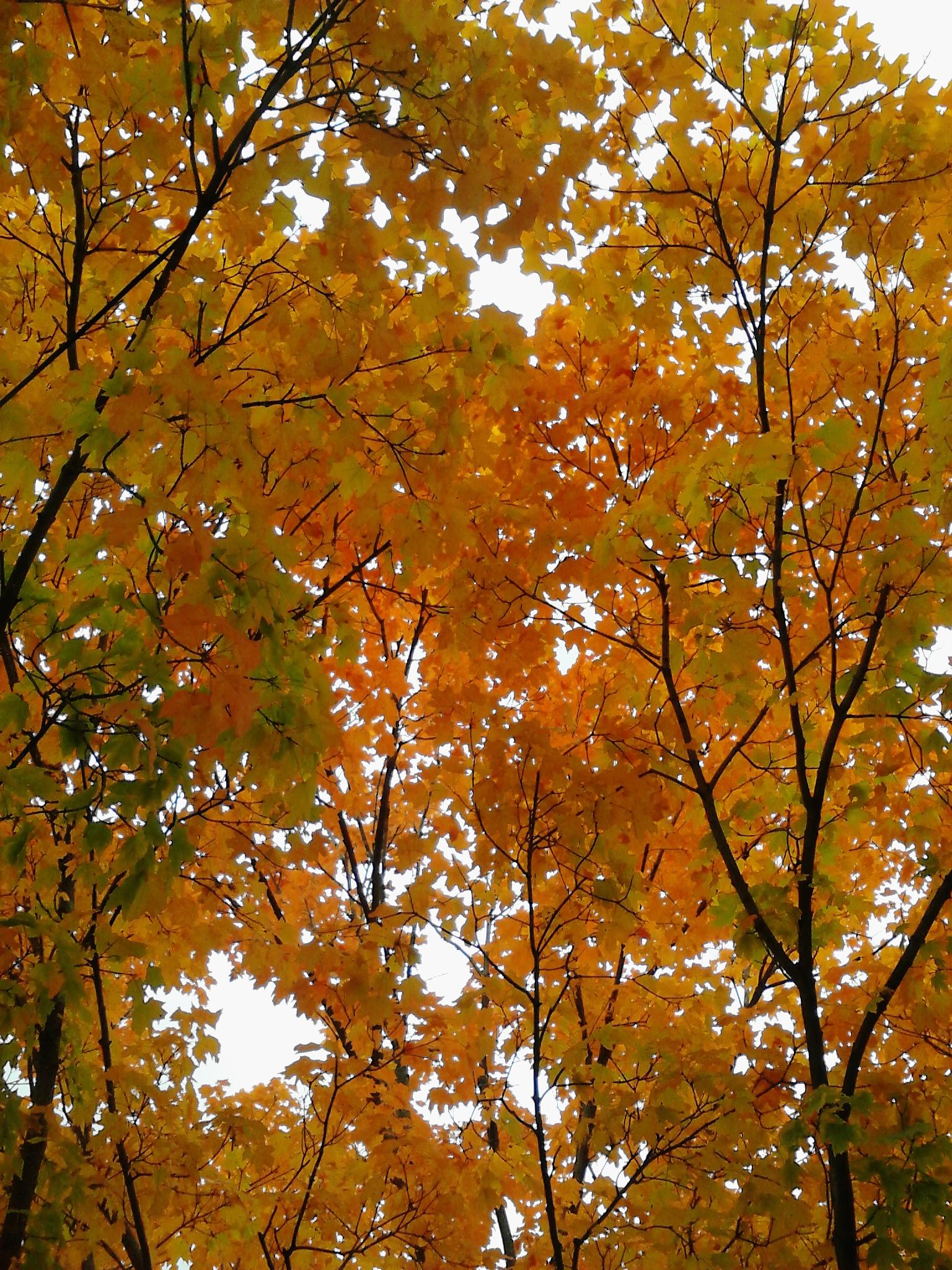 Golden Fall by mary.keenantownsend