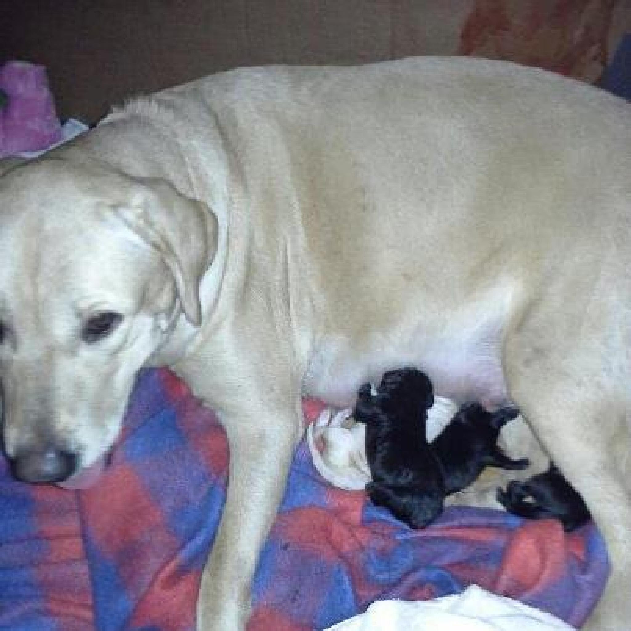 Roxy and Puppies by mary.keenantownsend