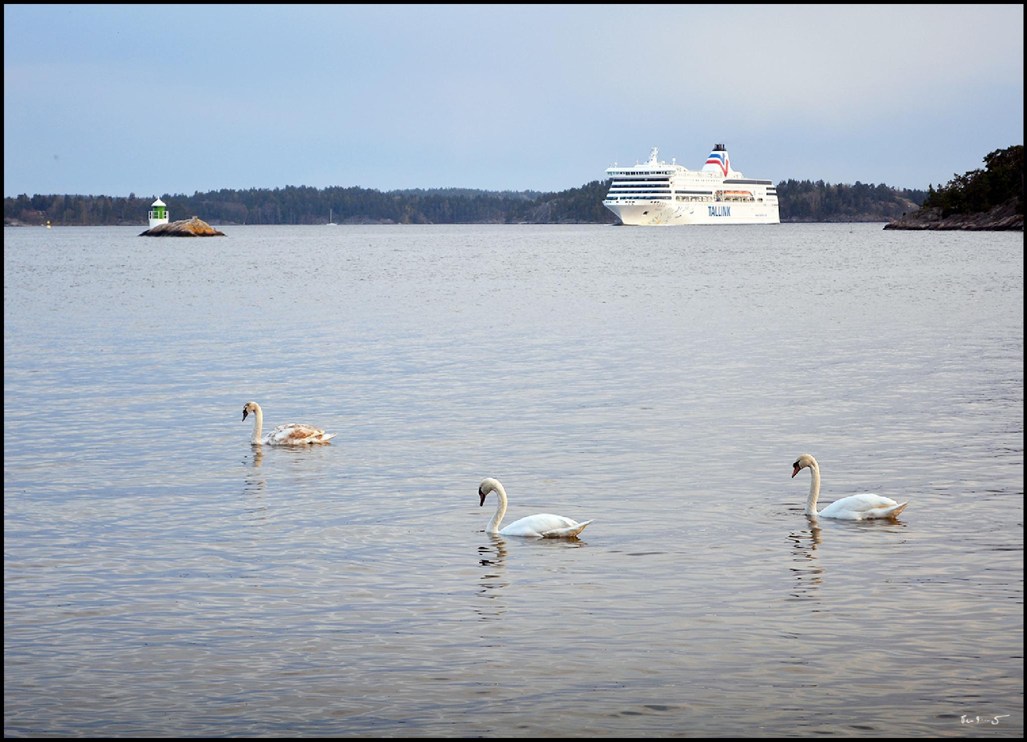 Formation greeting a ferry by Per Arnesjö