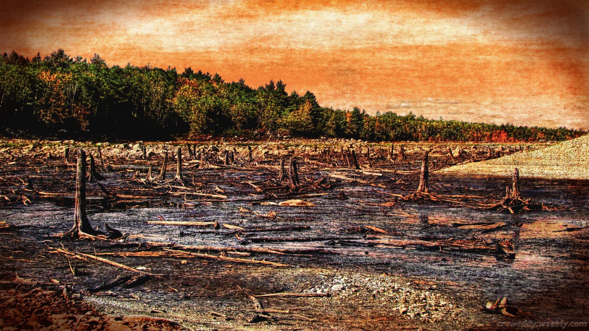 stumps by crow eddy