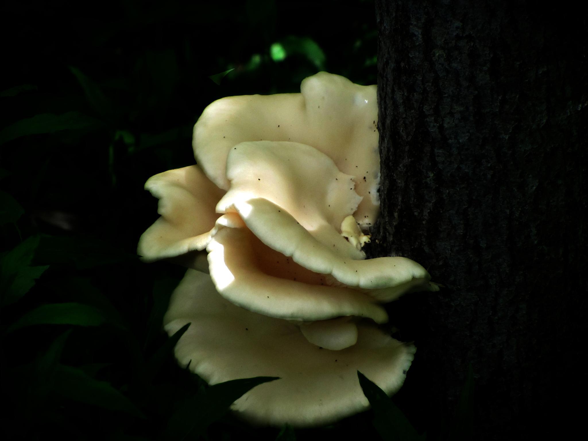 Fresh Fungus by crow eddy