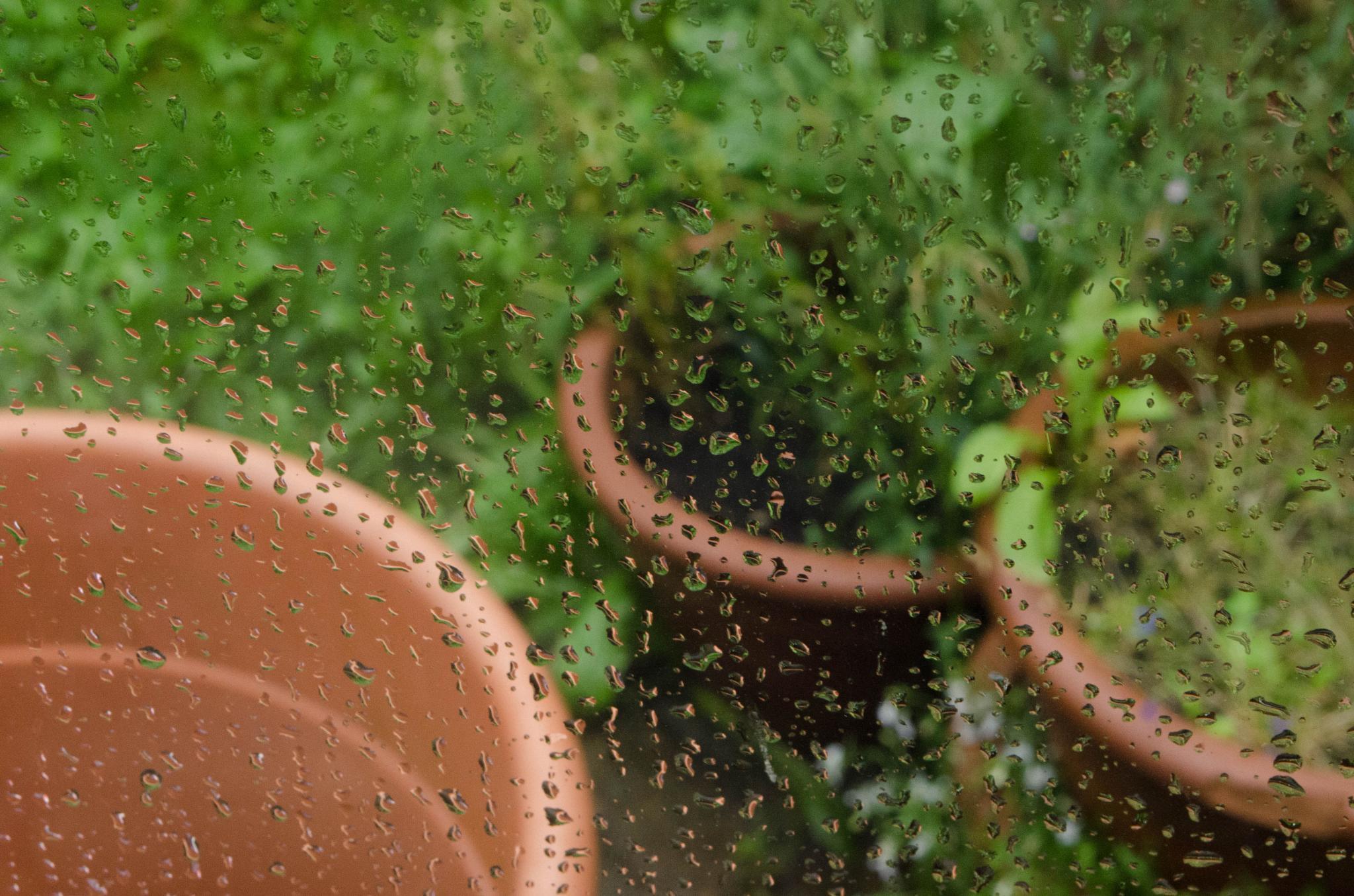 Watering the Plants by Kelley Lewis