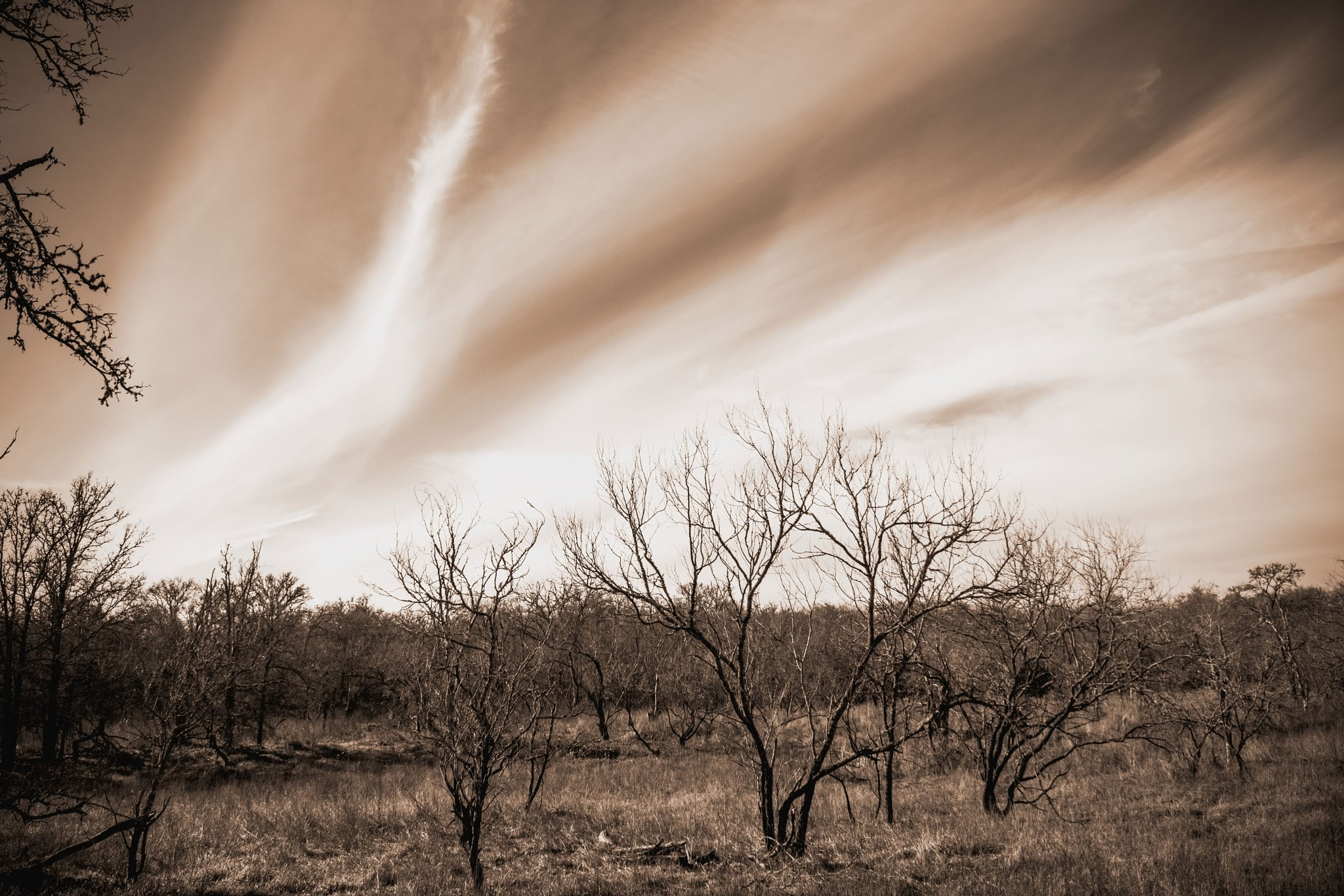 Wind Swept Clouds by Michael Hines