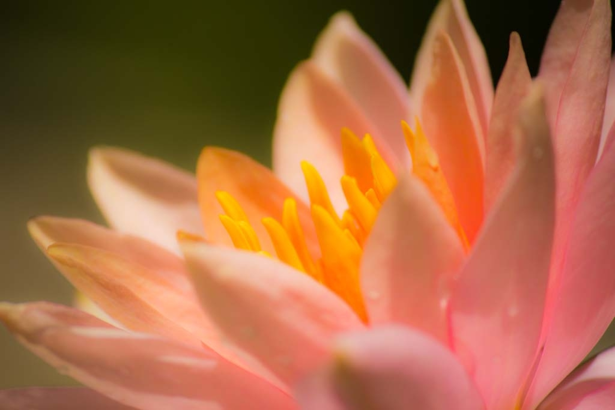 Waterlily by Michael Hines