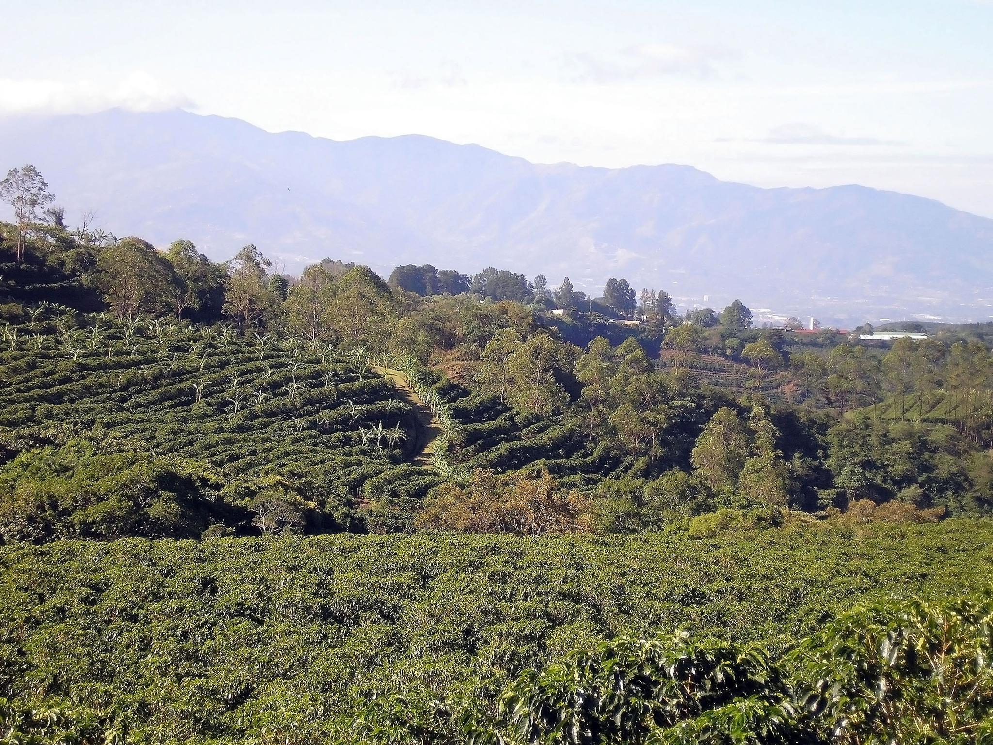 Tour from ship of Coffee plantation by KarynG
