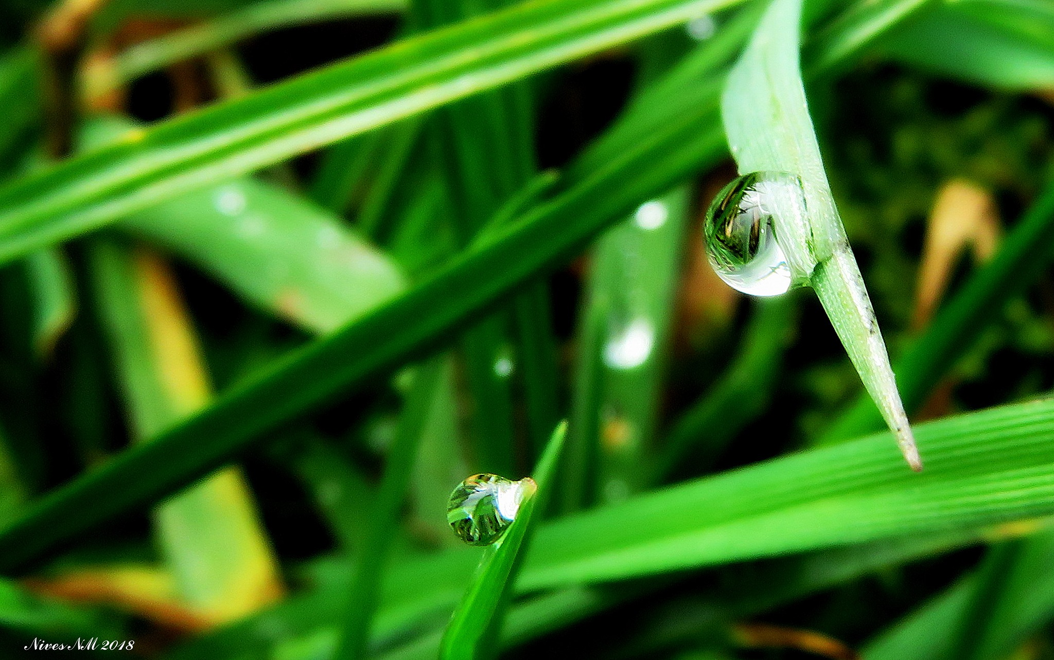 drops 1. by nives.n.marusic