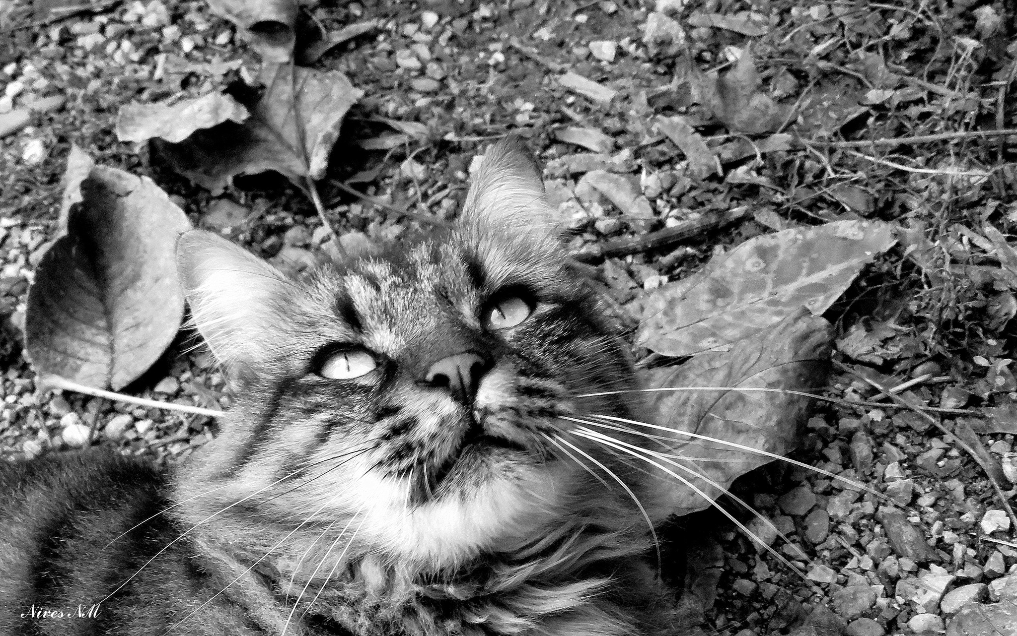 cat and autumn by nives.n.marusic