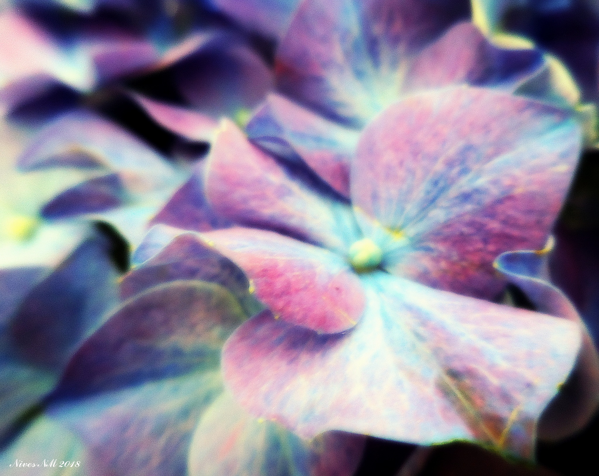 colorful by nives.n.marusic