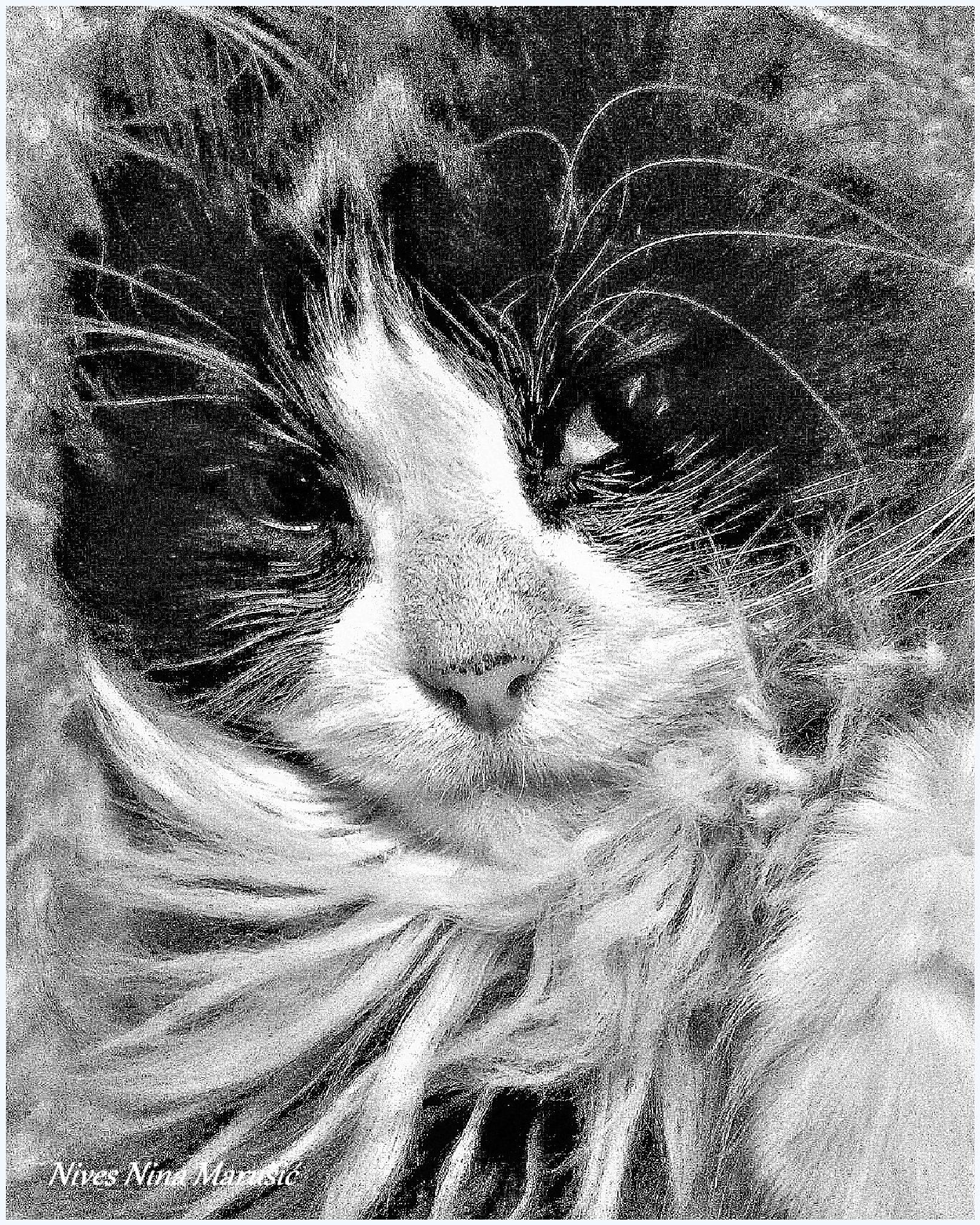 my cat by nives.n.marusic