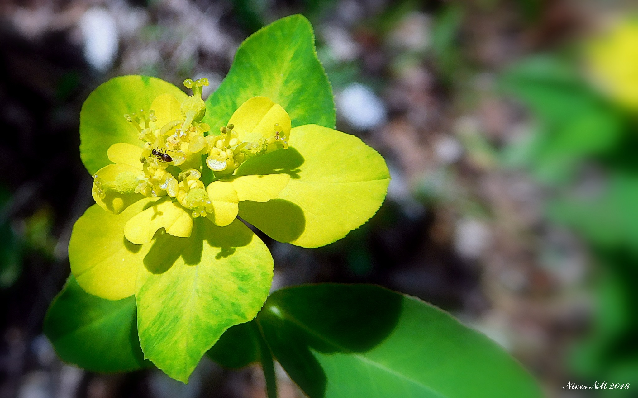 green and yellow....and a small ant by nives.n.marusic