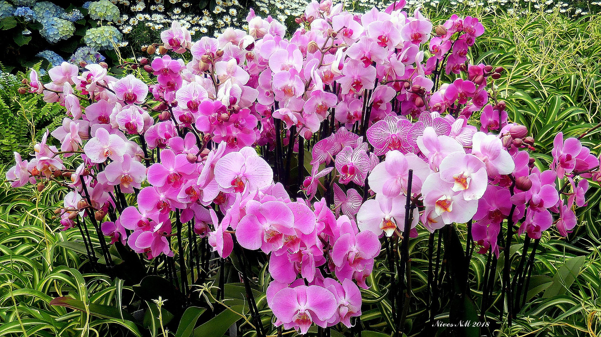 many orchids by nives.n.marusic