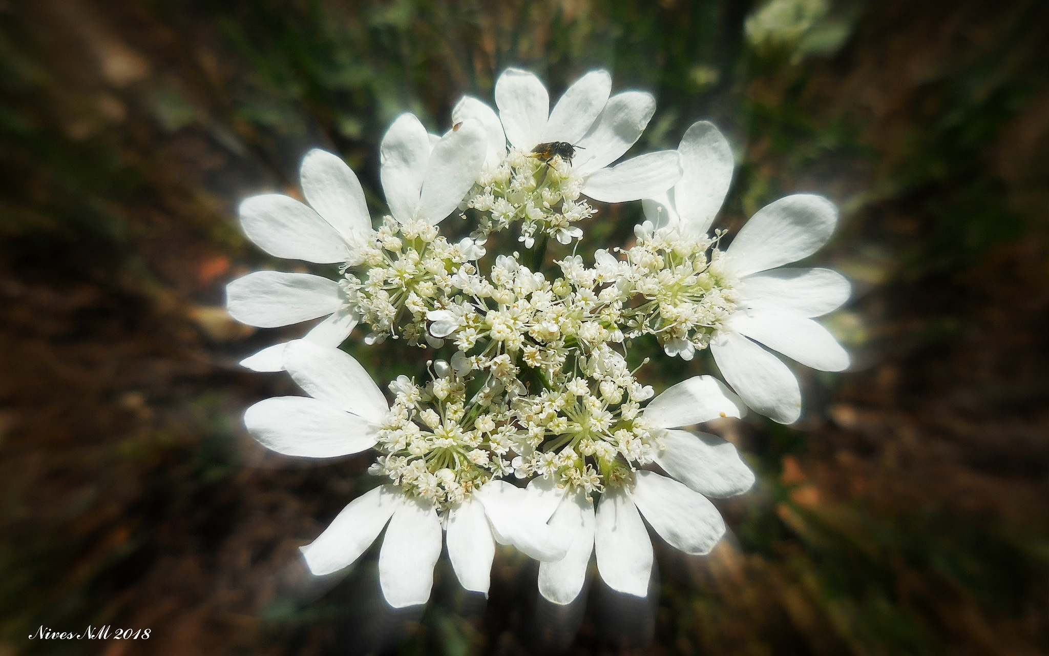 flower from nature by nives.n.marusic