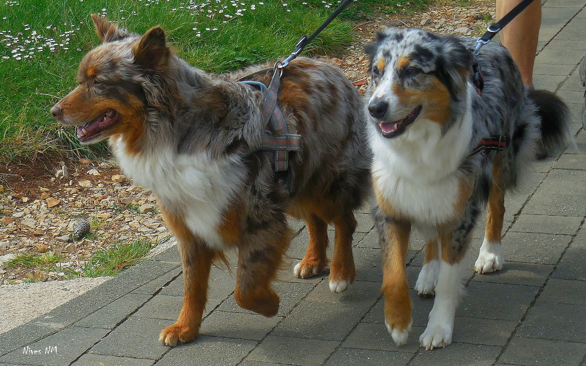 beautiful dogs by nives.n.marusic