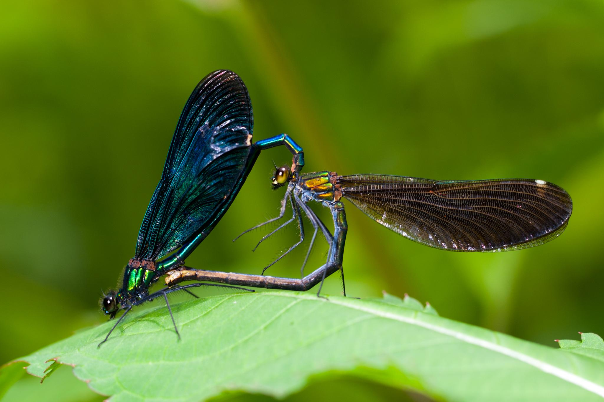 Love by Mikael Nilsson Photography