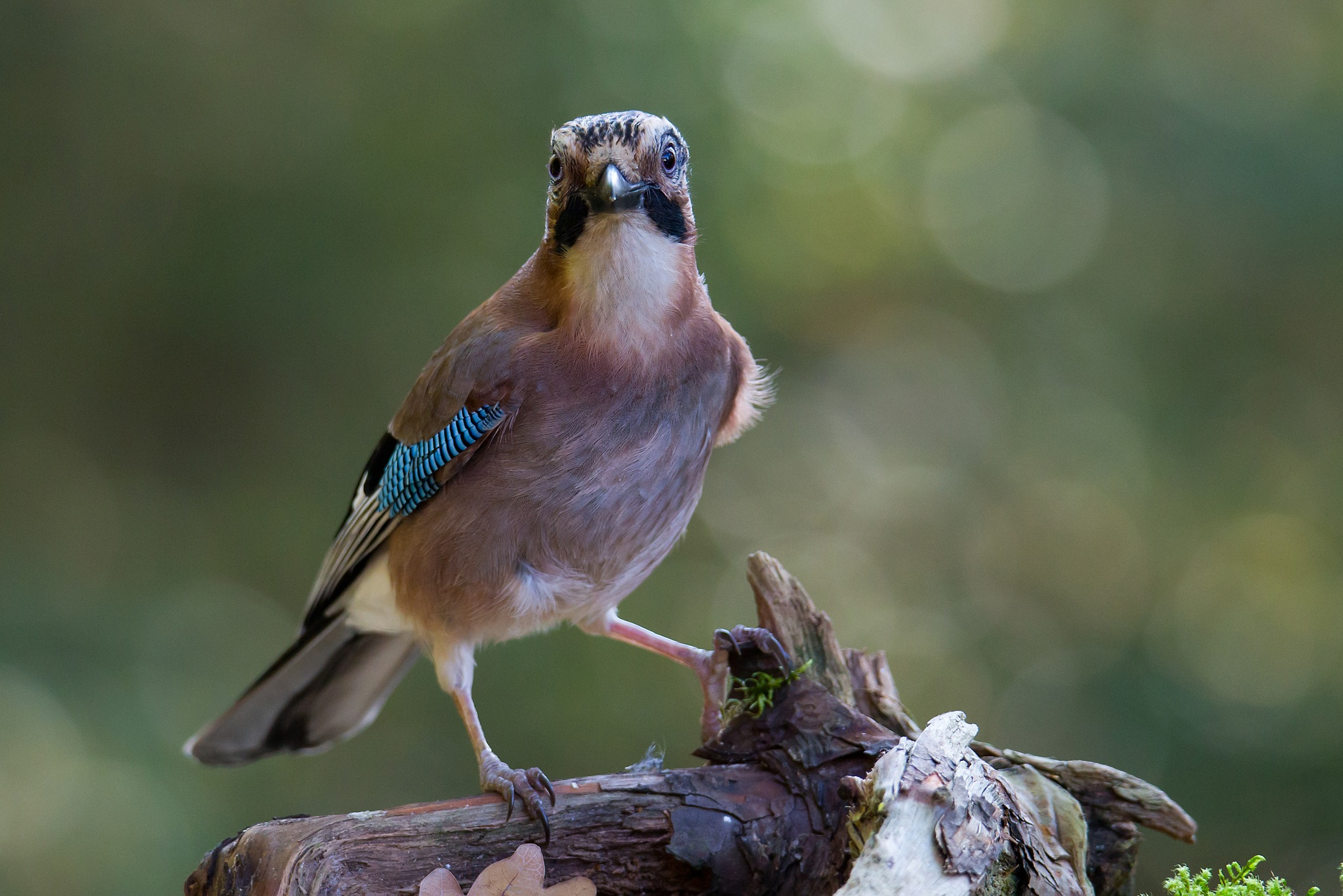 Jay by Mikael Nilsson Photography