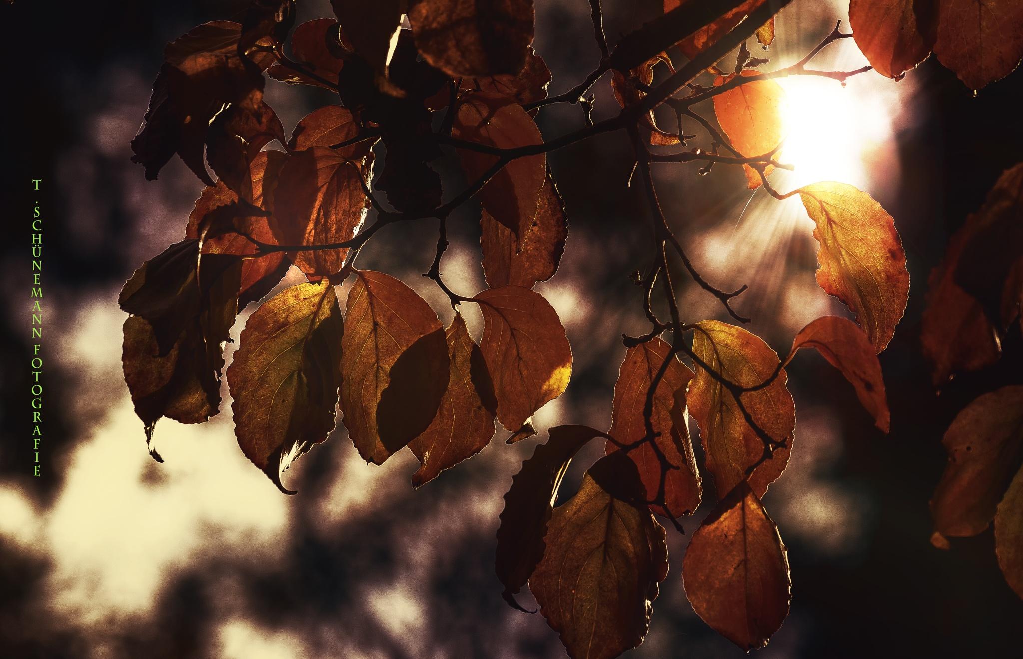 Herbst Anfang by Thorsten Schünemann