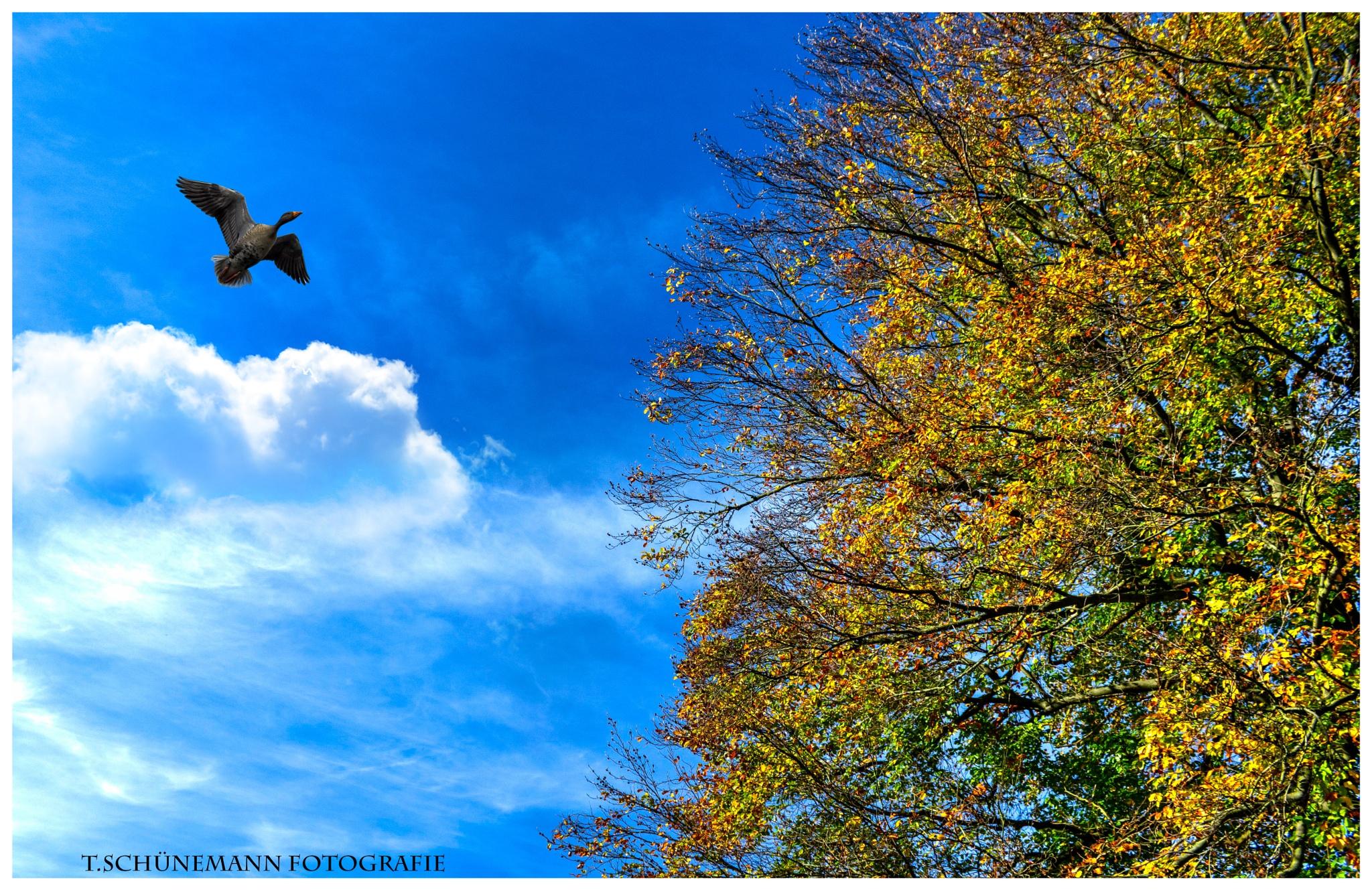 ein Tag im November 2014 by Thorsten Schünemann