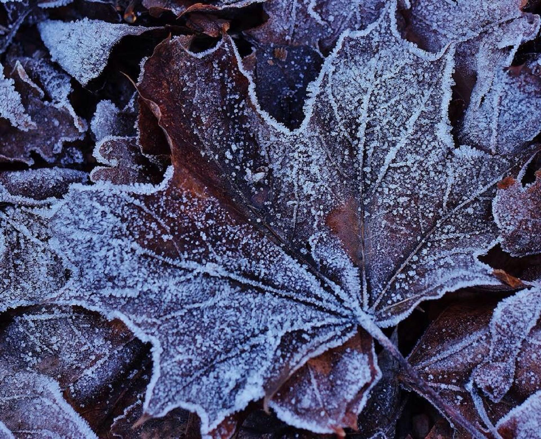Frost 1 by james.newton.3344