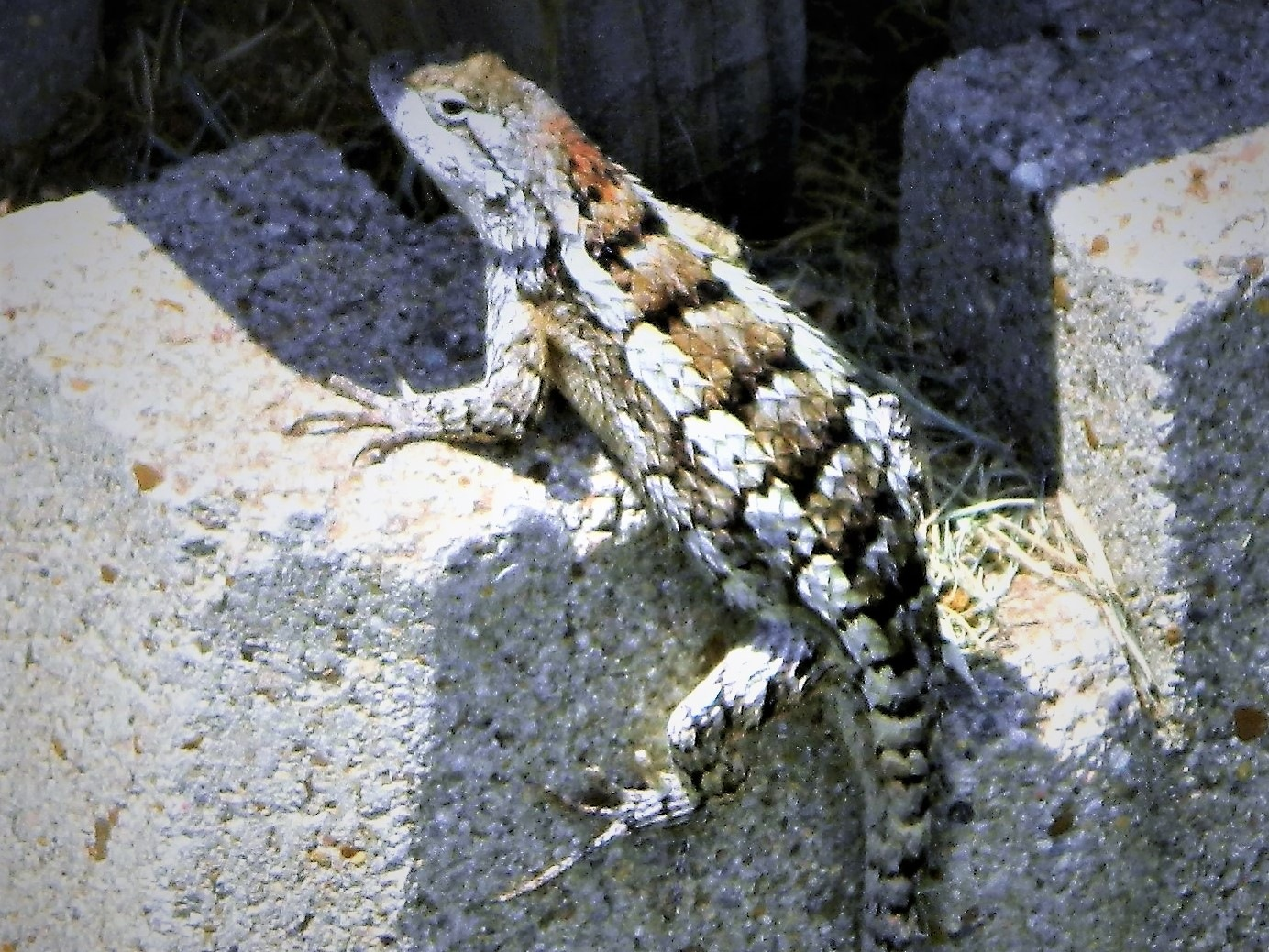 Lizard by getta.stephens